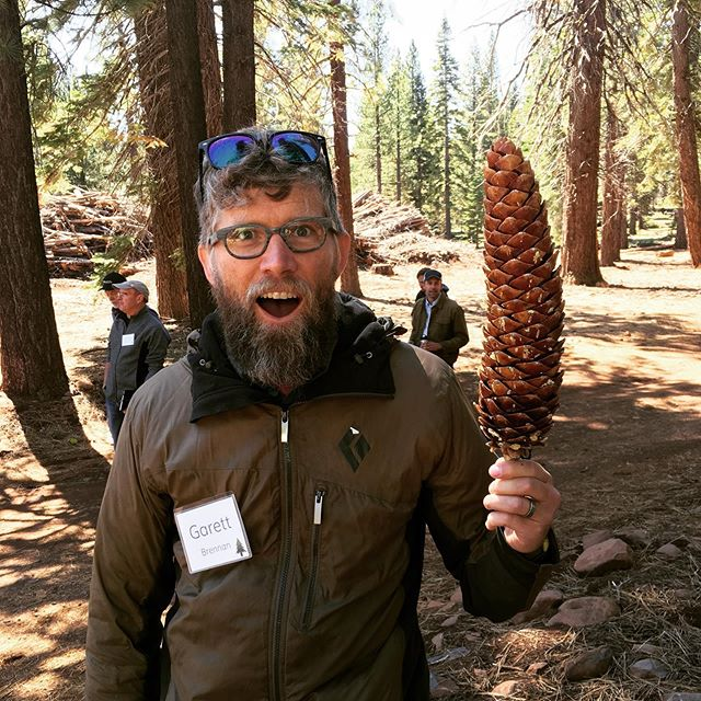 Scoping out site locations for a domestic climate gap year in the Sierras to learn about wildfire, forestry and biomass energy generation.  Check out the size of that pinecone!! Anyone know which tree that comes from??