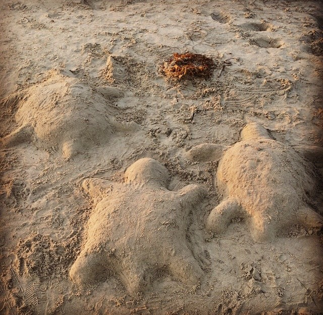 Sand Turtlesjpg