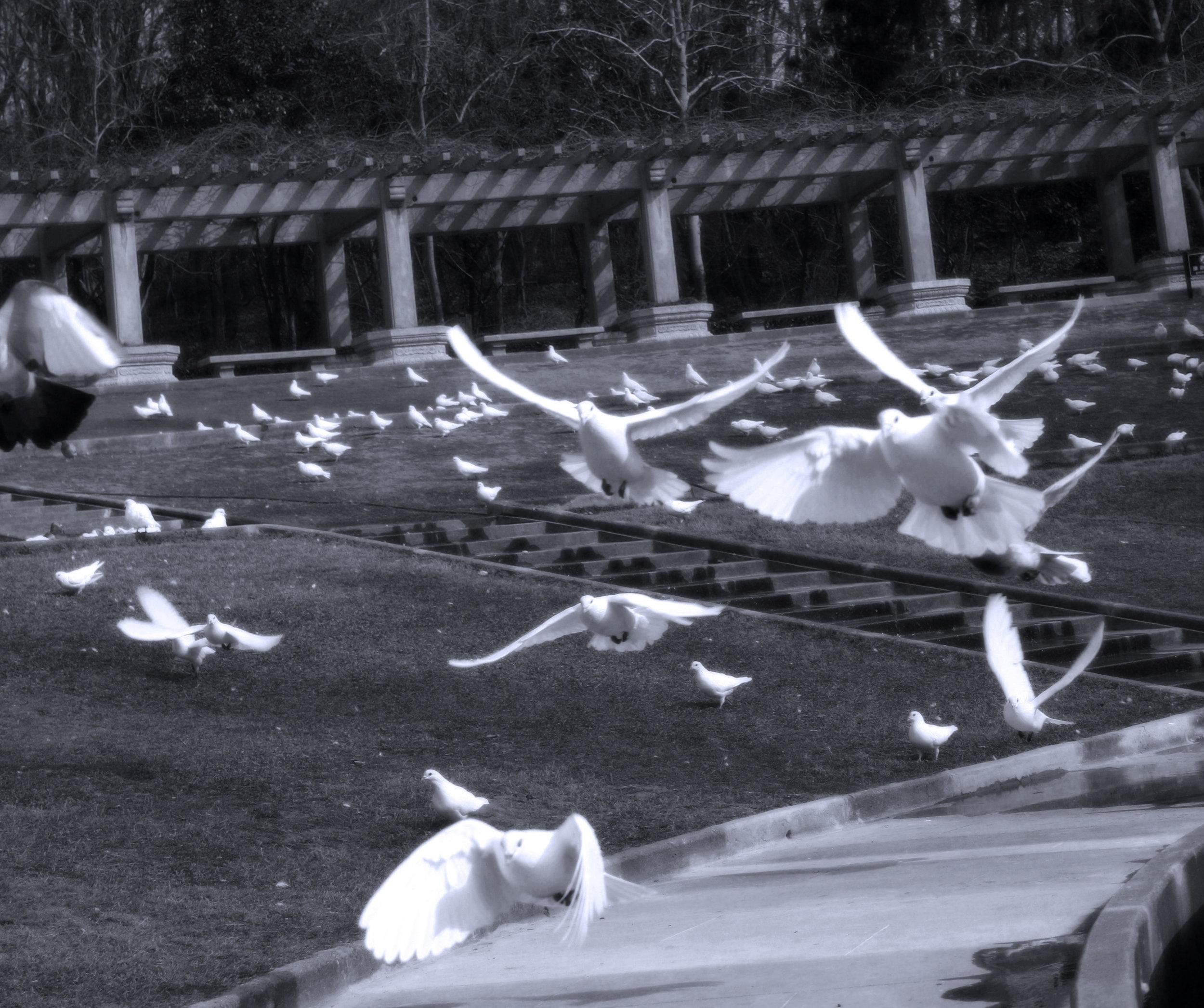 Fly Away — Sun Yat Crap