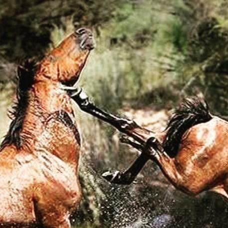 Today I am the horse, tomorrow I am the hoof #bitresGarcia #bitres  #horseVhoof #hoofVhorse