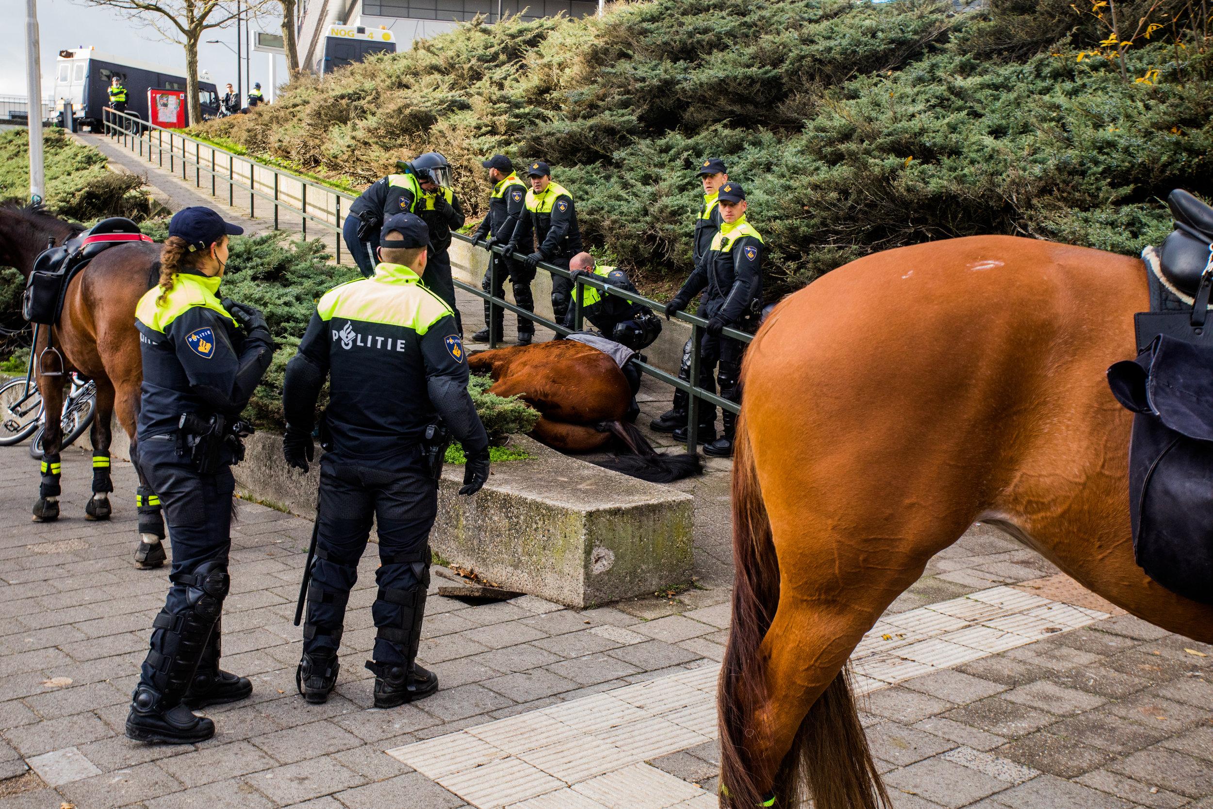 Politiepaard verongelukt tijdens demonstratie