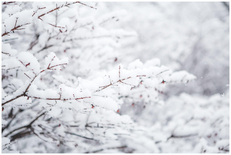 IMG_9801_Snow Day - blog.jpg
