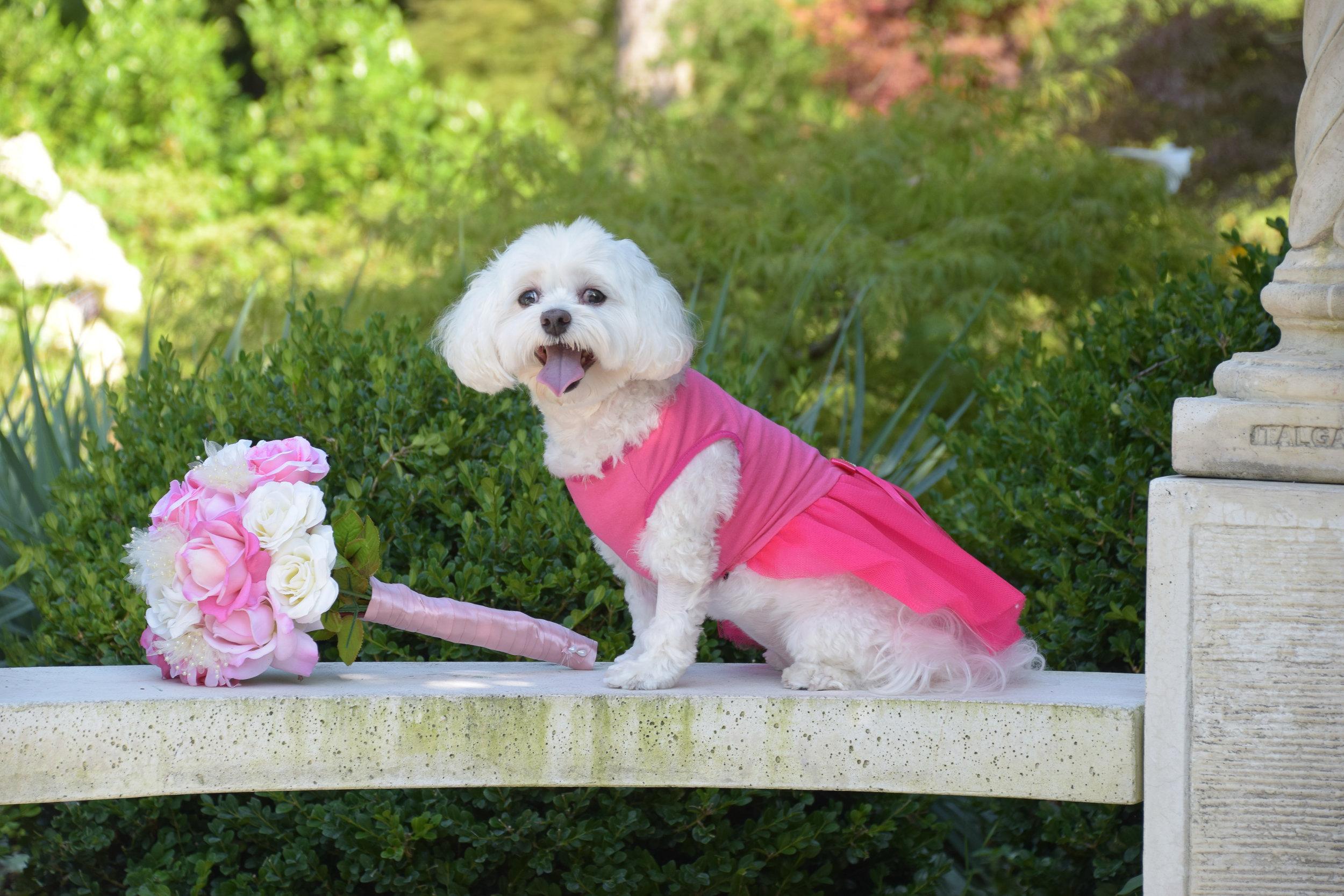 Doggie bridal portrait.
