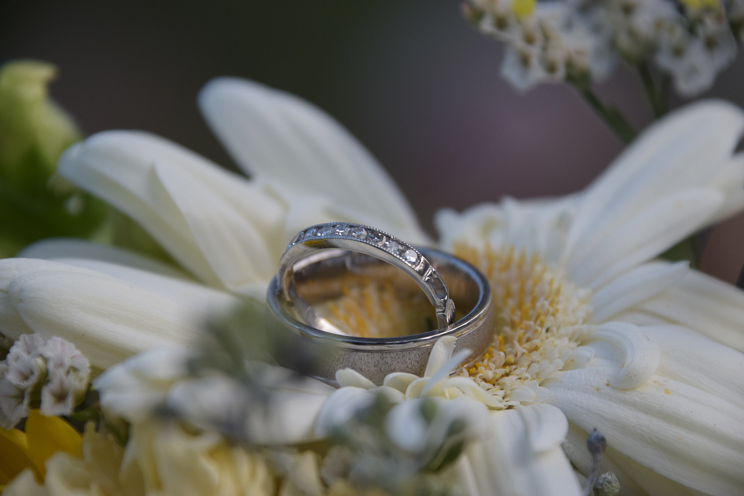 Macro shot of wedding rings.