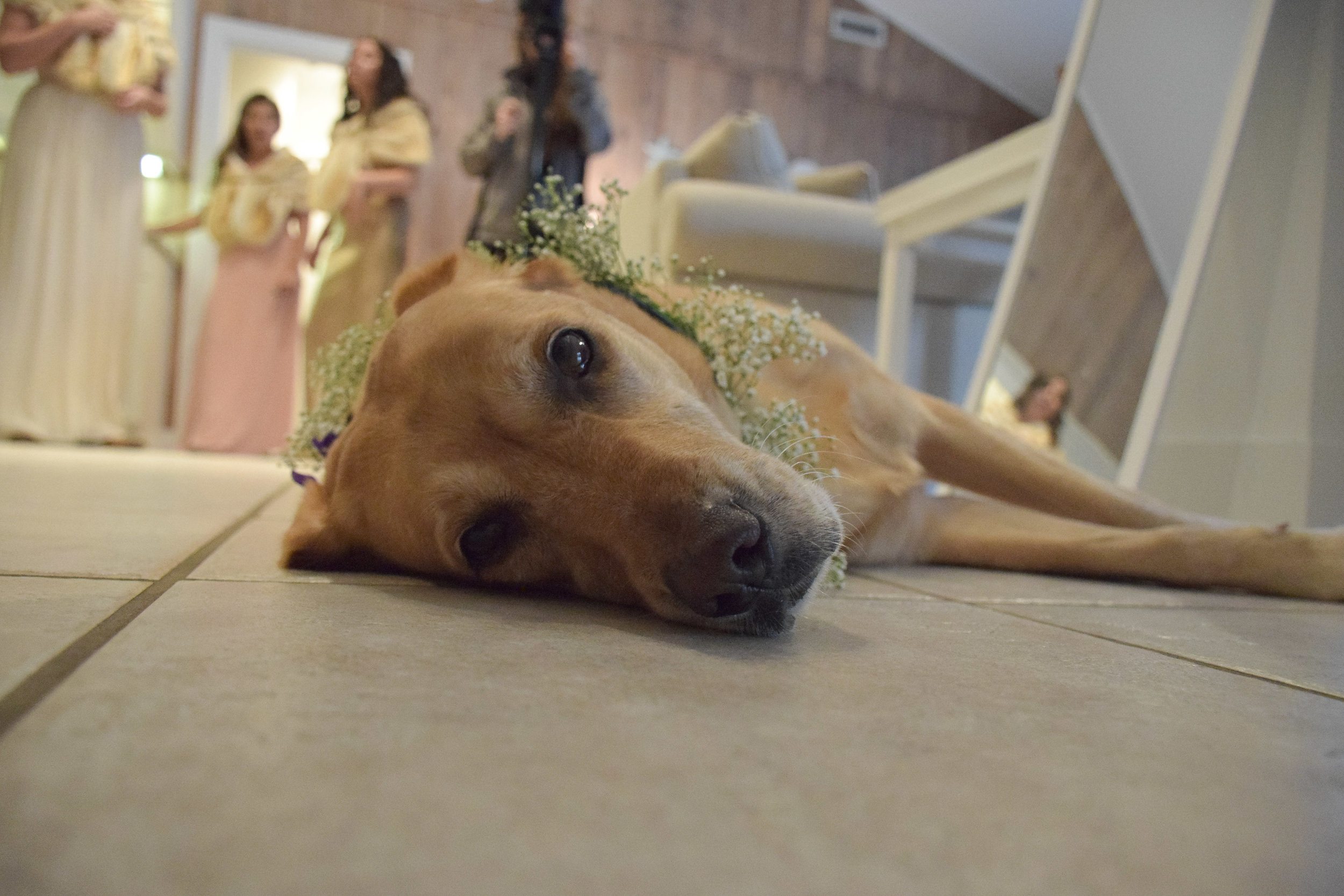 - Wedding Dog with bridesmaids in the background. Wrightsville Beach, NC.