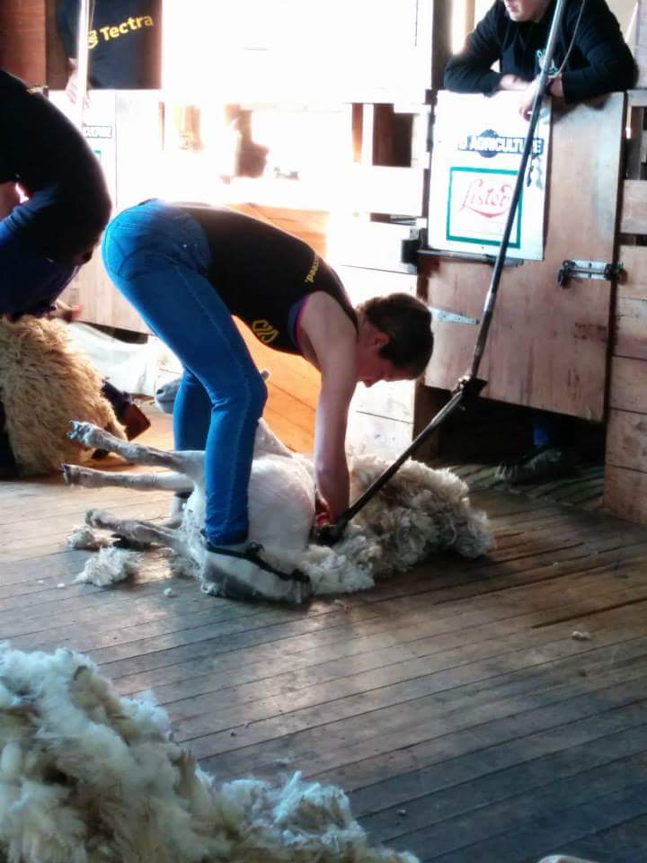 Harriet Gardner in action in the shearing shed.jpg