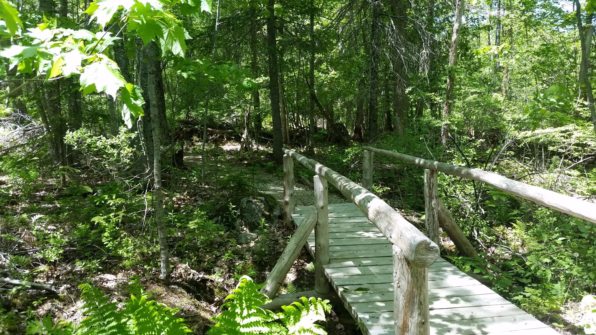Town-of-Blue-Hill-walking-trail-BHHT.jpg