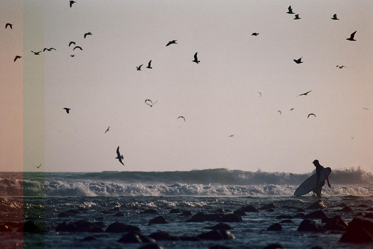 Topanga sky full of birds uncropped_0020.jpg