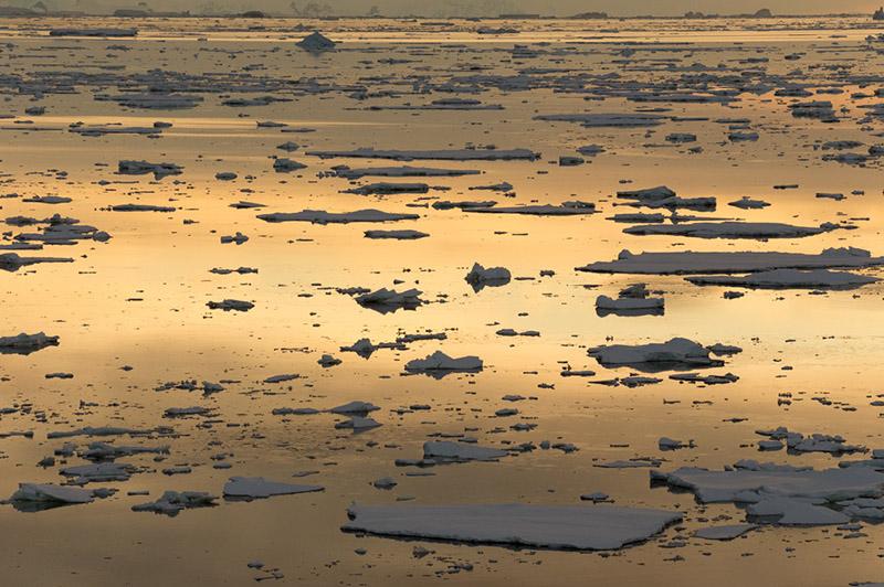 Copper Reflections. Anvers Island, Antarctica