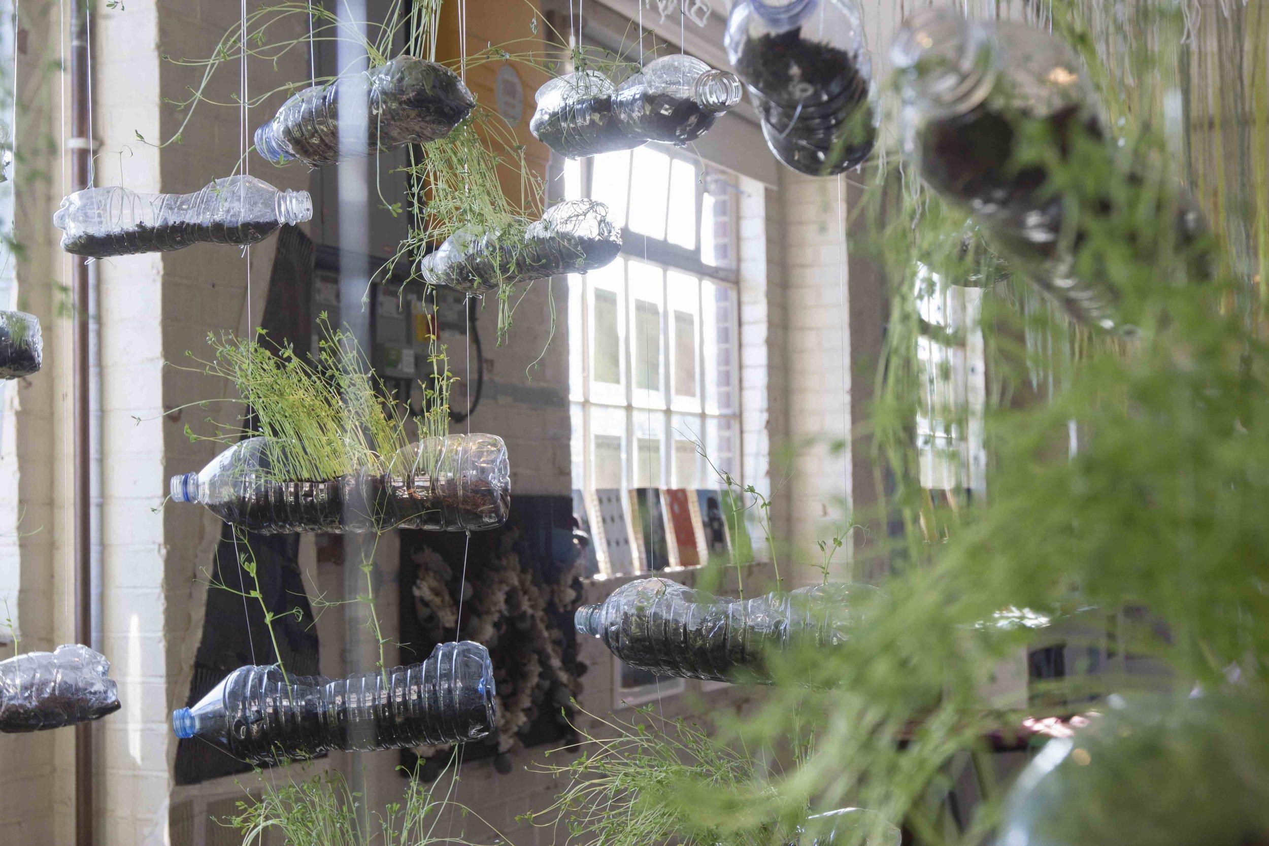 MICRO BEING, Tasha Aulls,  2018. Living plant installation.  Tropic 08ºN