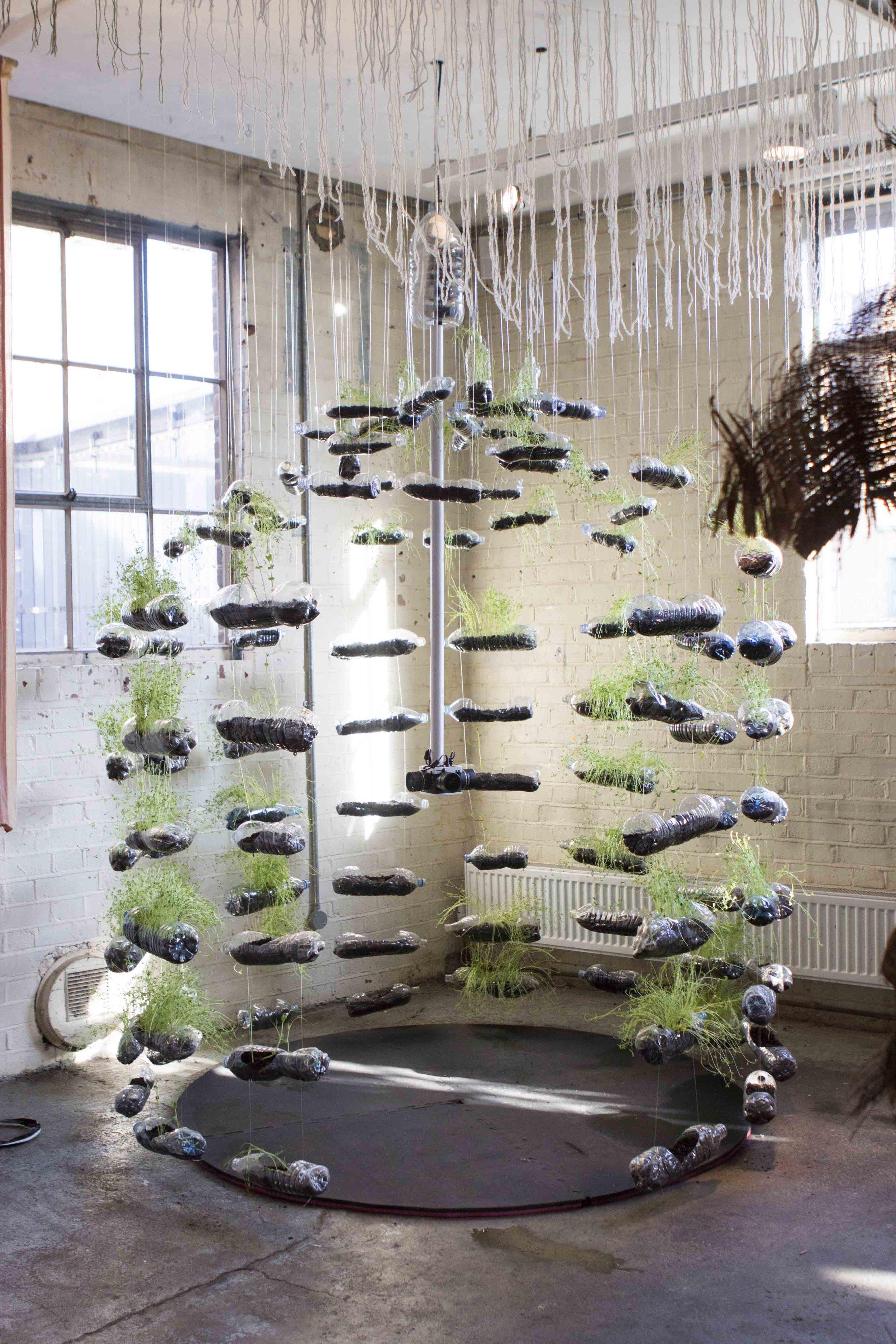 MICRO BEING, Tasha Aulls,  2018. Living plant installation.  Tropic  0 8ºN