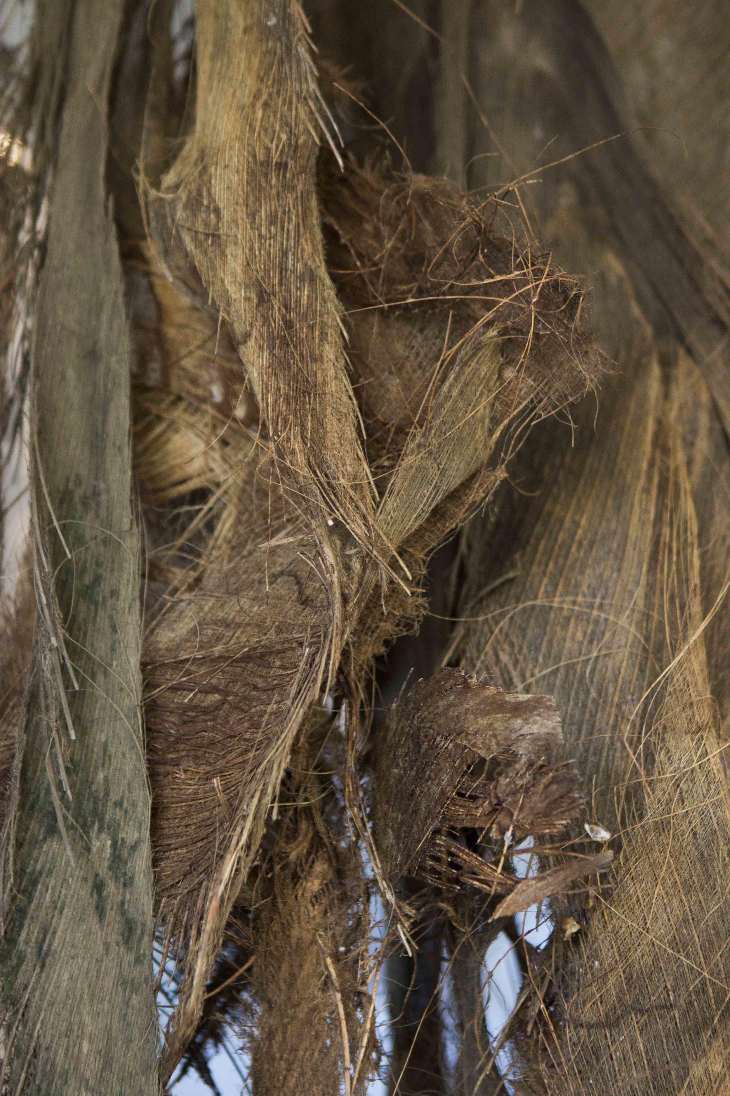 UNFOLD, Ane Krogseth,  2018. natural fibres, dried coconut palm.  Tropic 08ºN