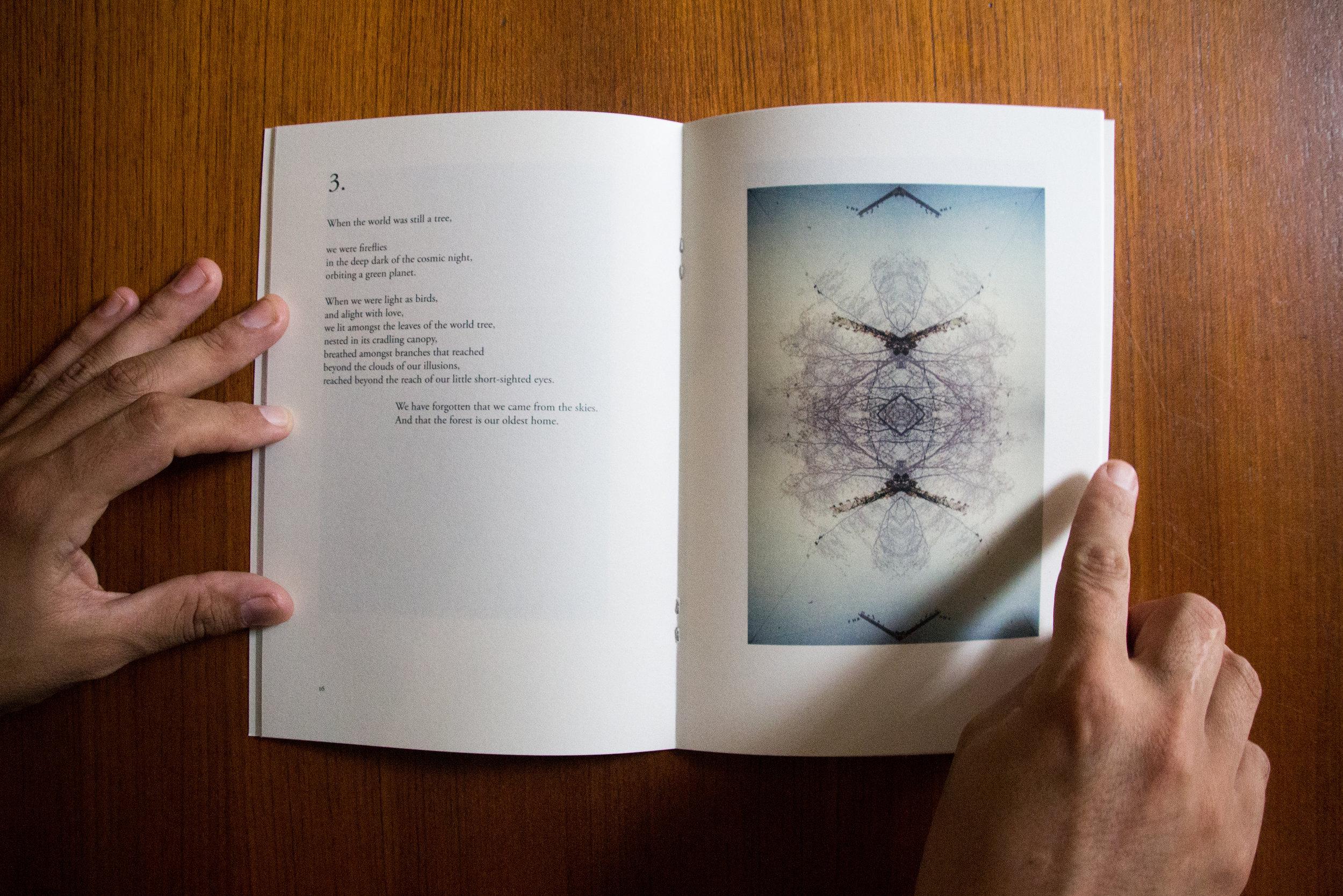 The Dreaming of Trees , Deborah Templeton, 2018.  Tropic 08°N