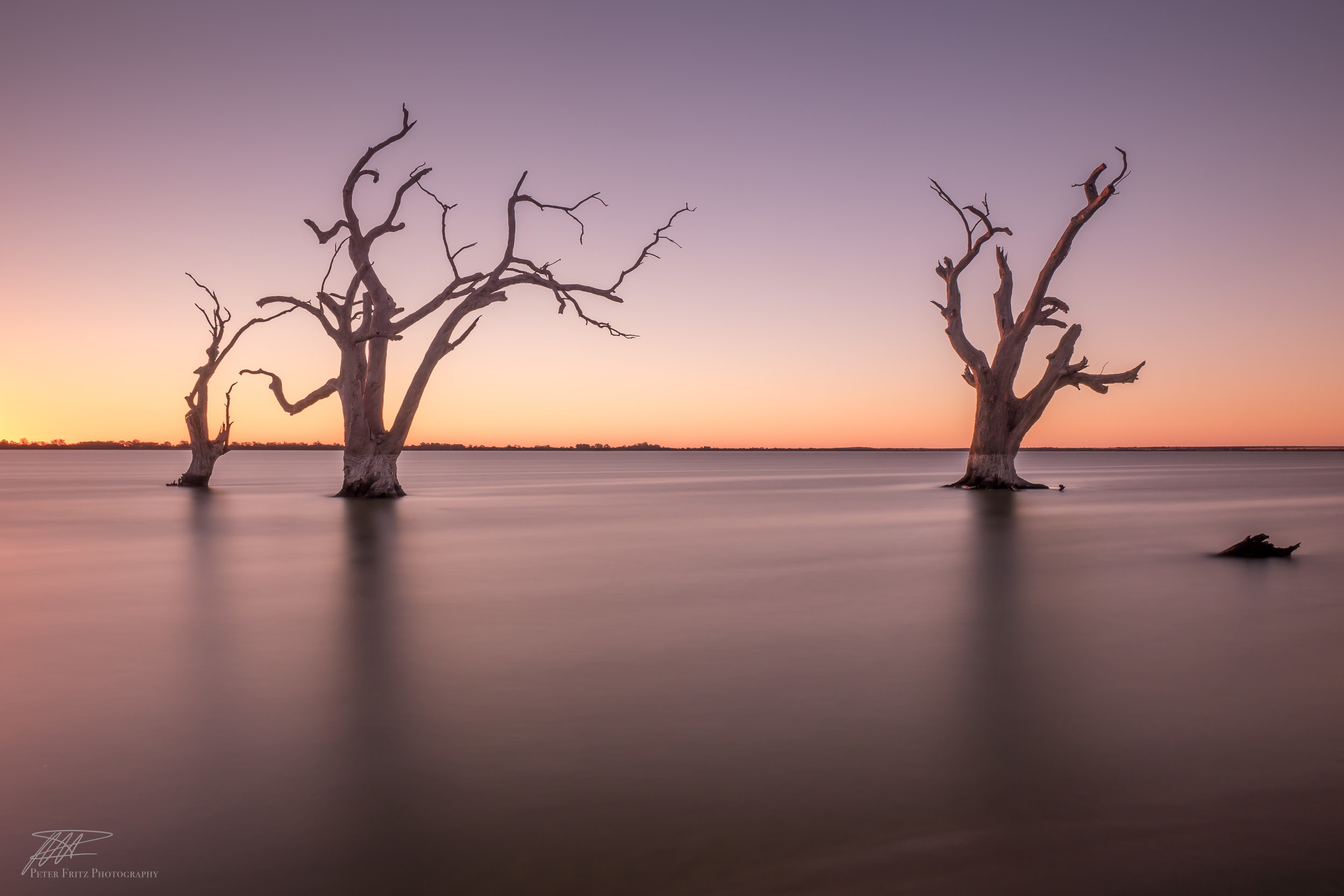 Bonney Trees