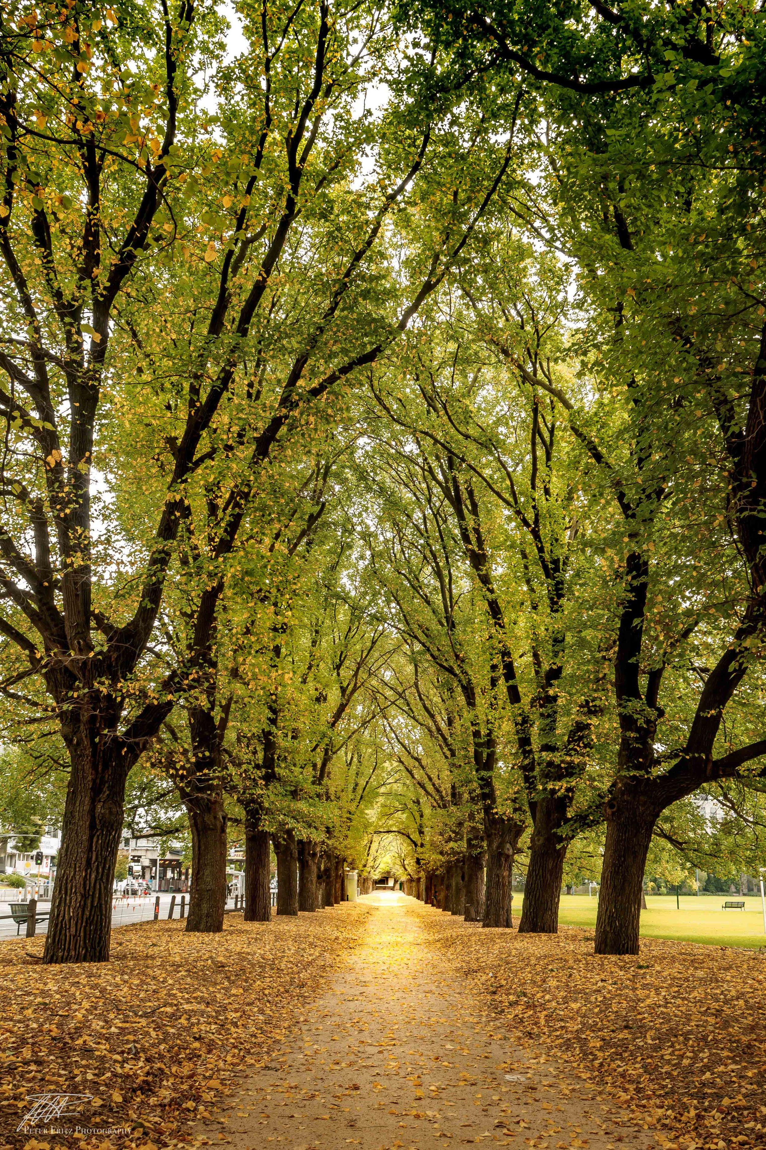 Fawkner Trees