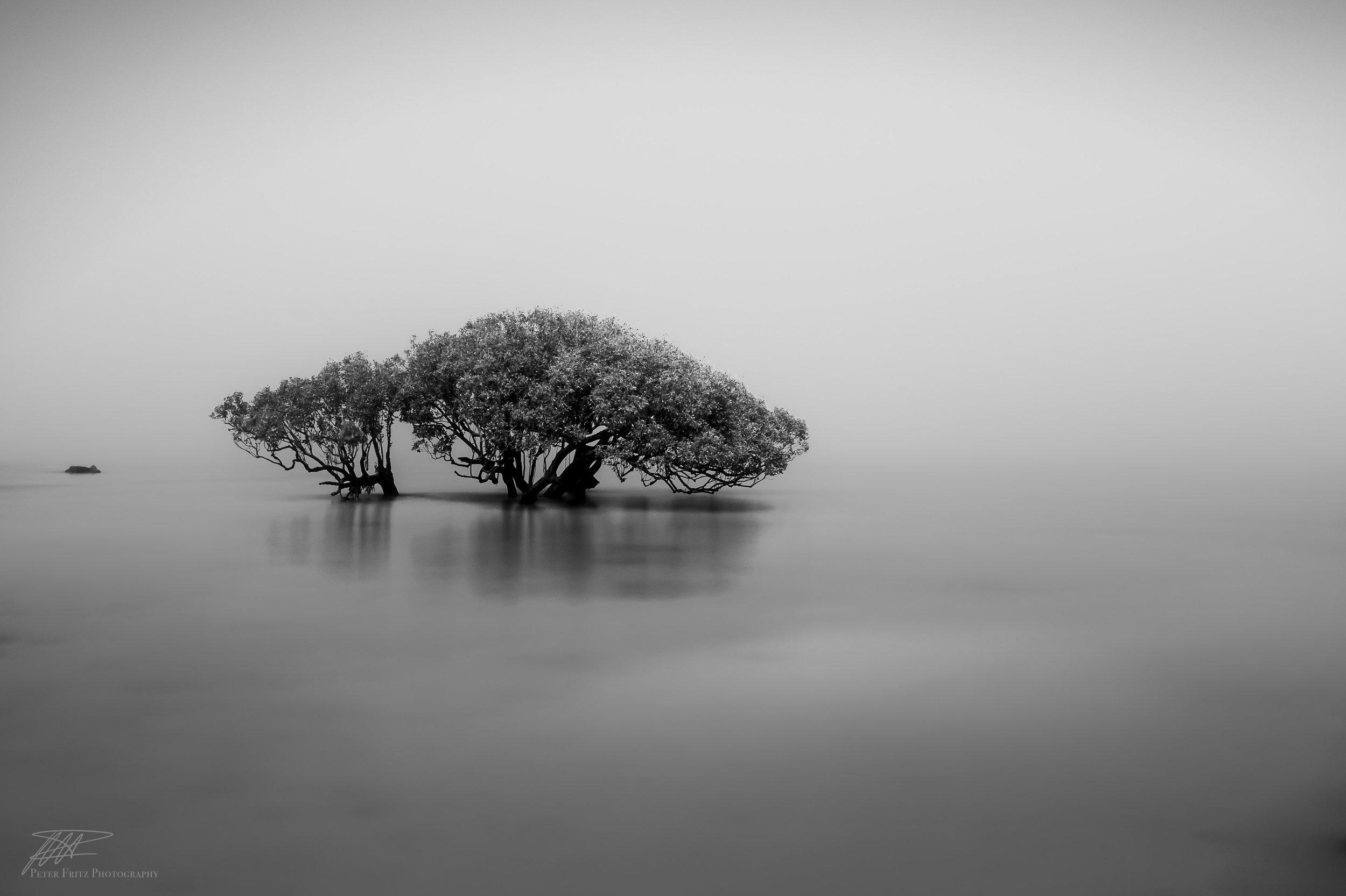 Isolated by the Fog 3x2.jpg