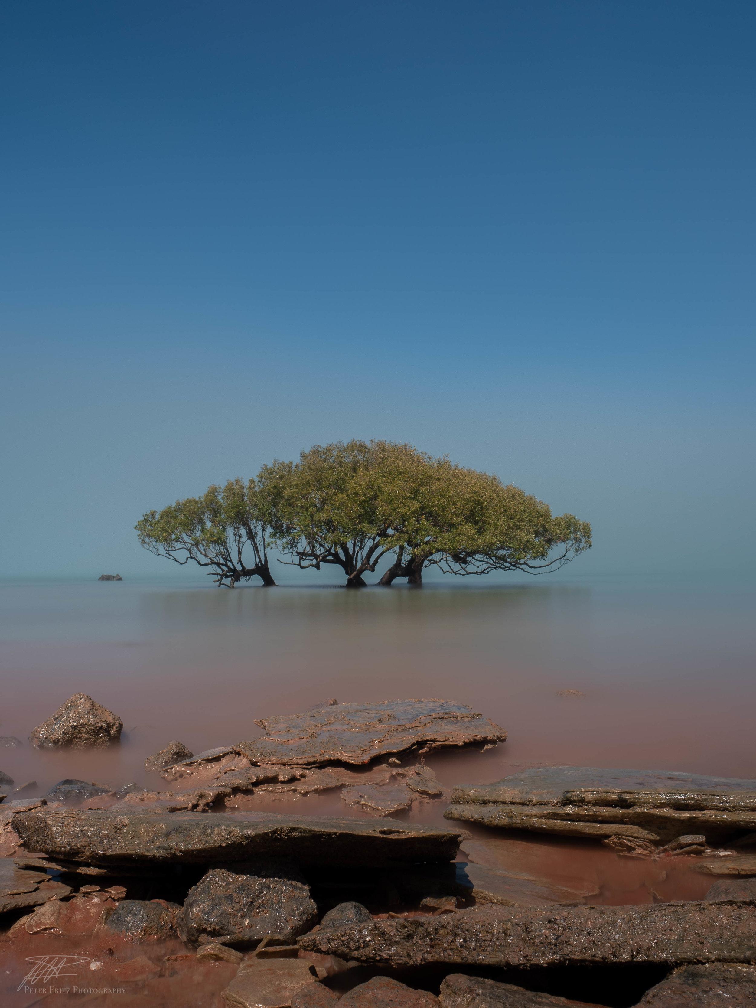 Alone in the Fog colour 4x3web.jpg