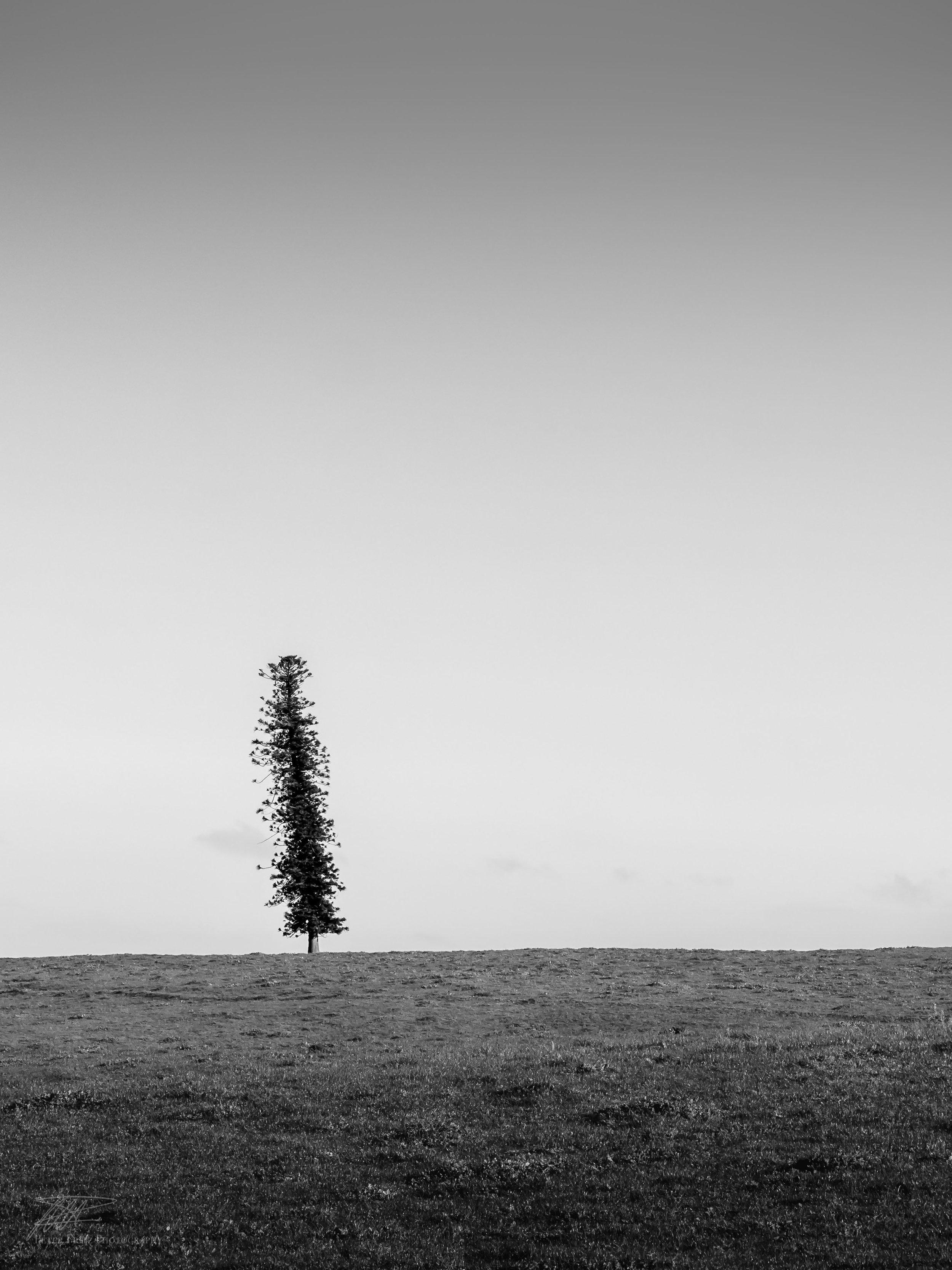Lone pine 4x3 web.jpg