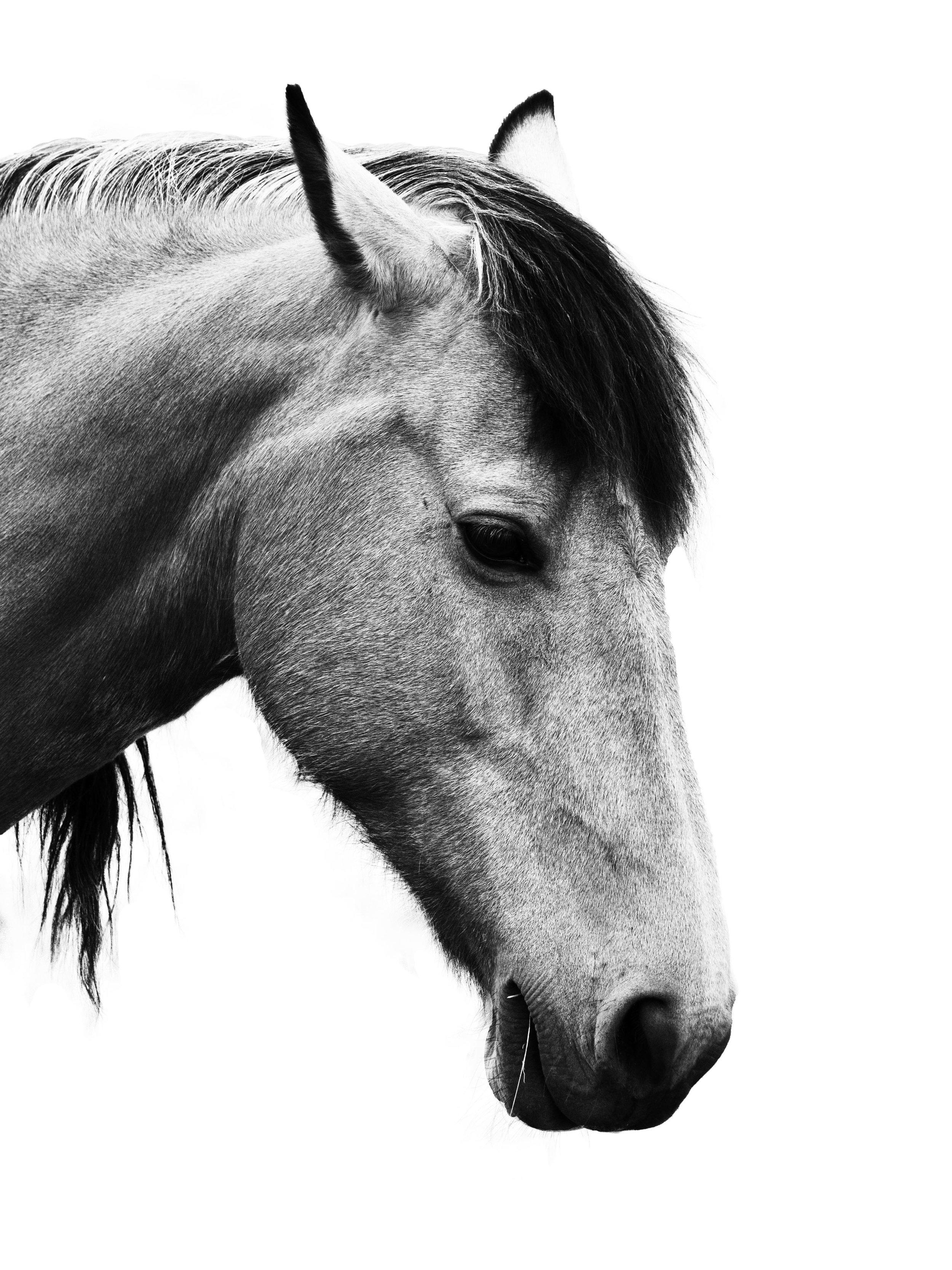 Horse bnw straw.jpg