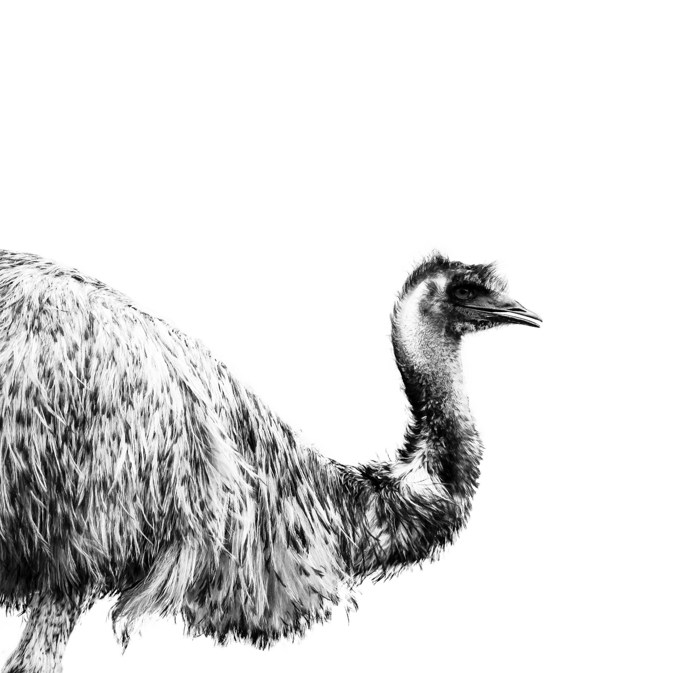 Emu Bnw jpeg.jpg