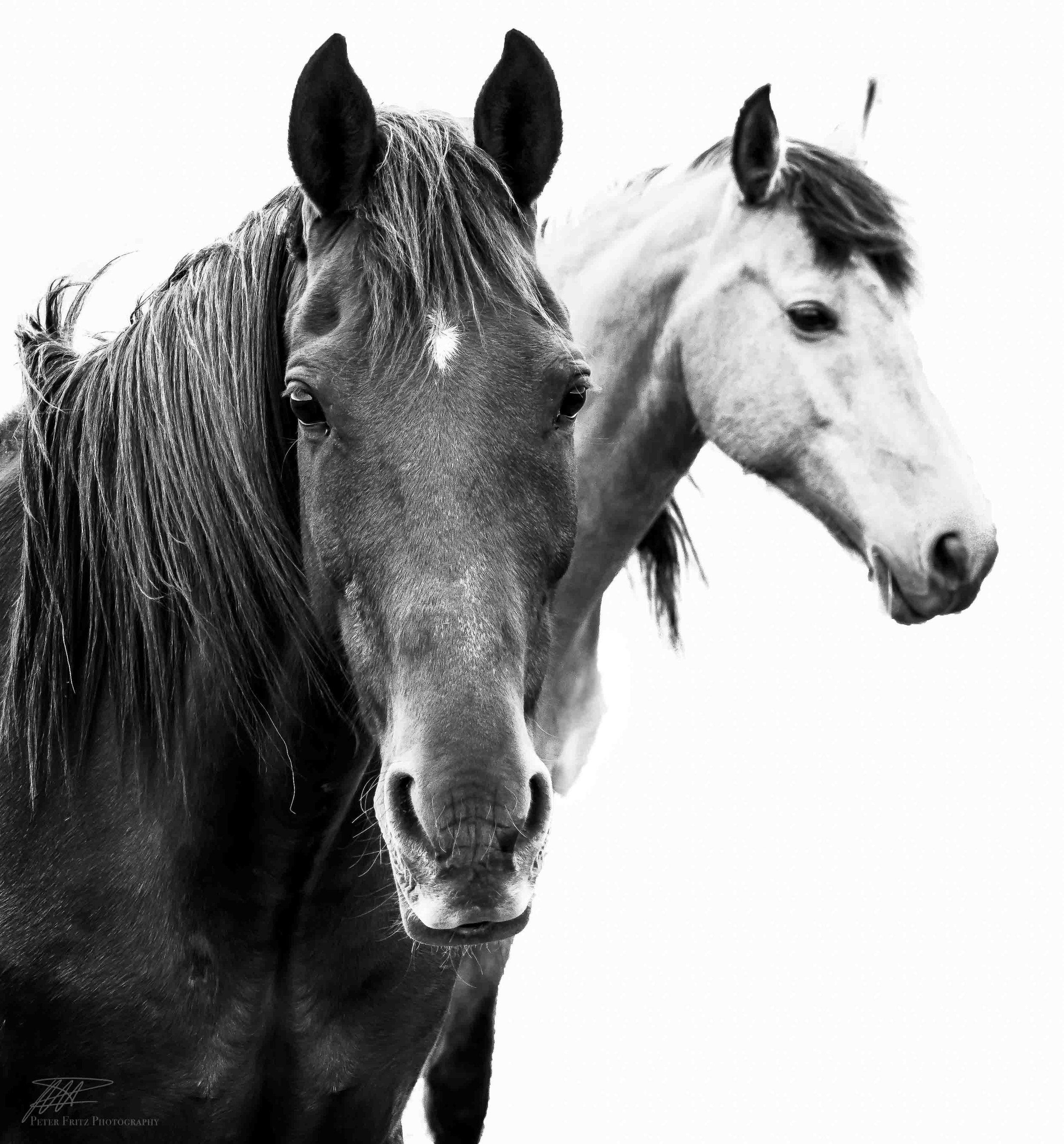 Horses 1x1 bnw web.jpg