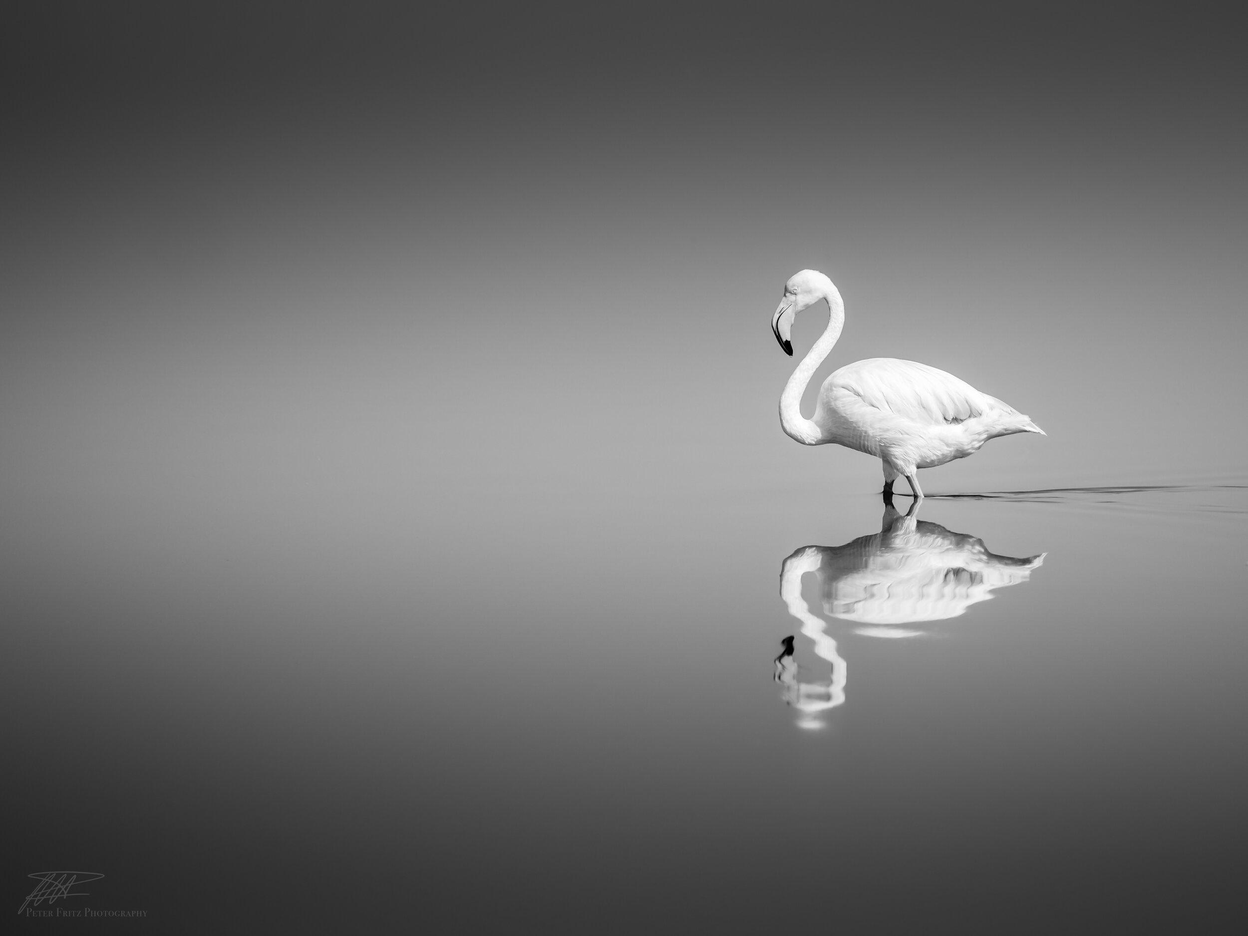 Flamingo BNW_.jpg