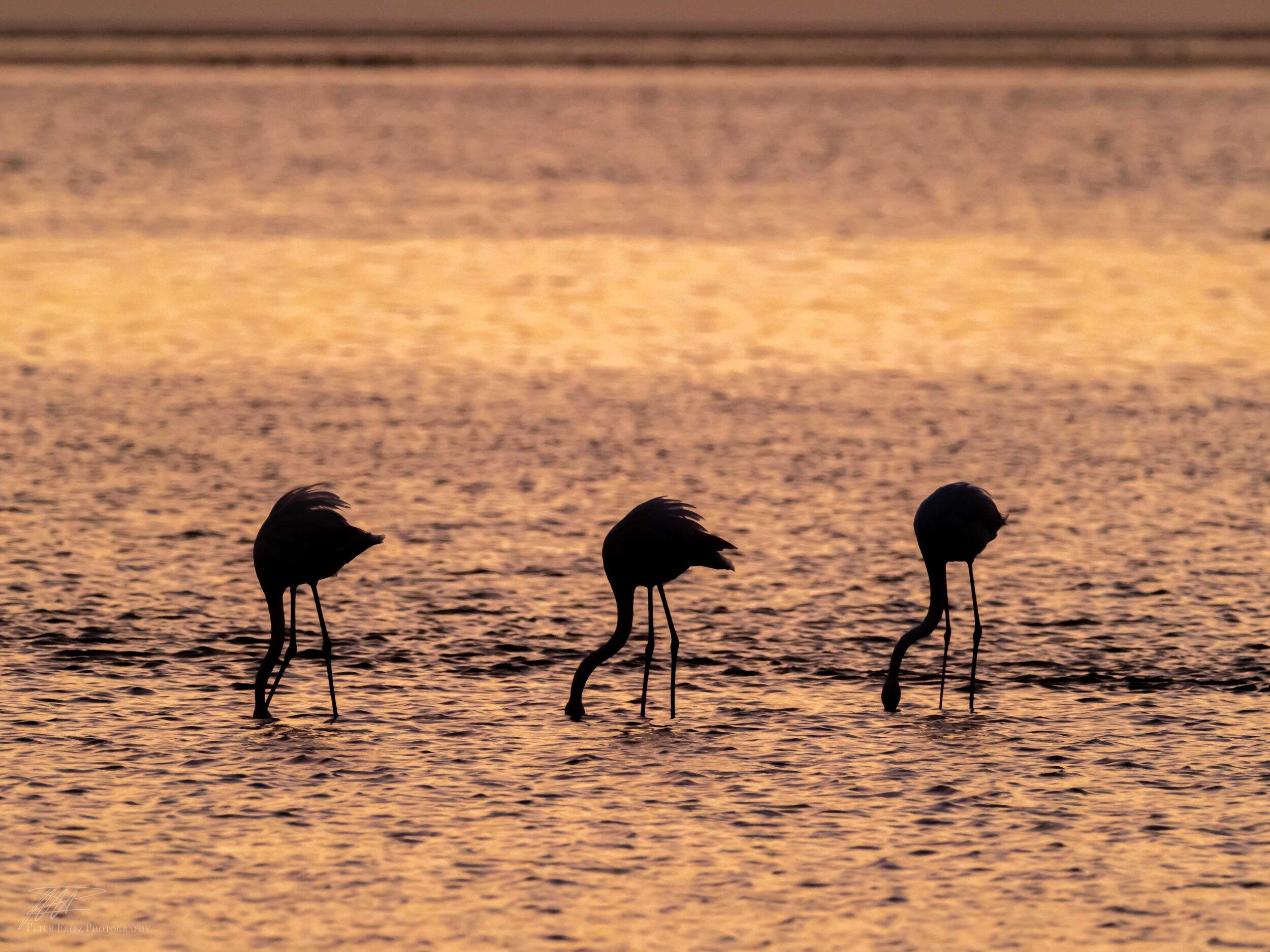 The Three Flamingoes 4x3 web.jpg