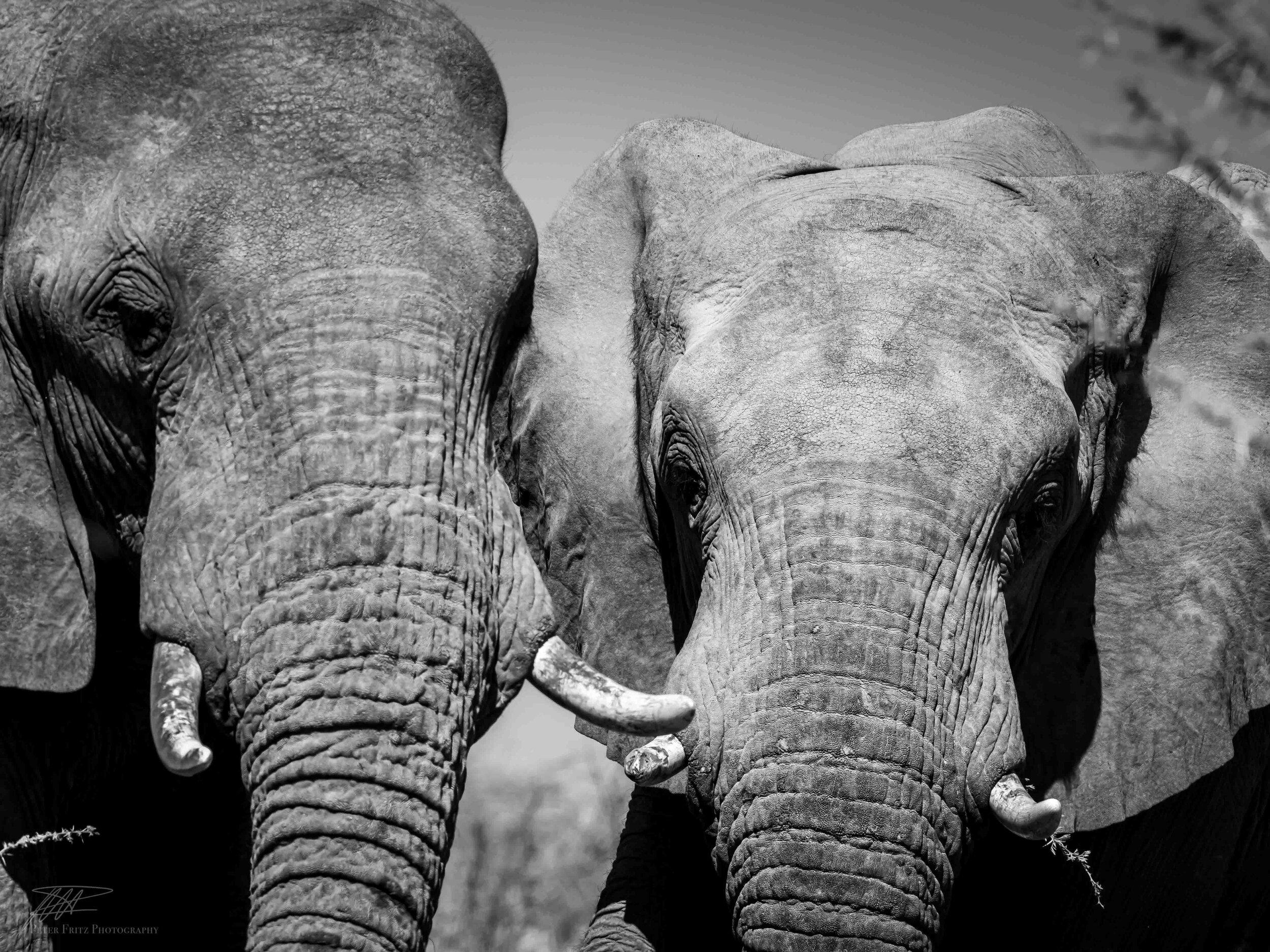 Elephant selfie.jpg