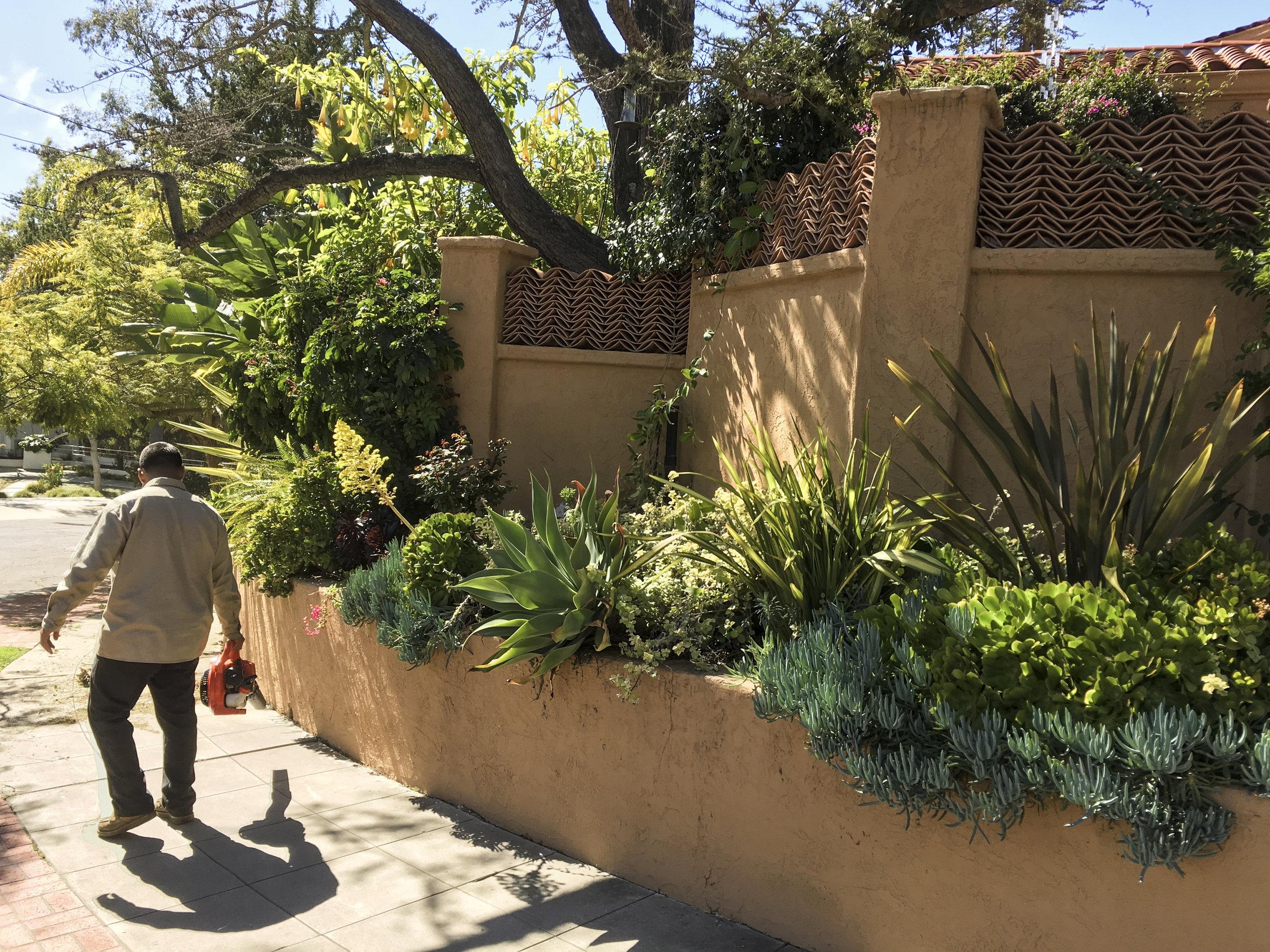 california_garden_roberto_flores_buck_13.jpg