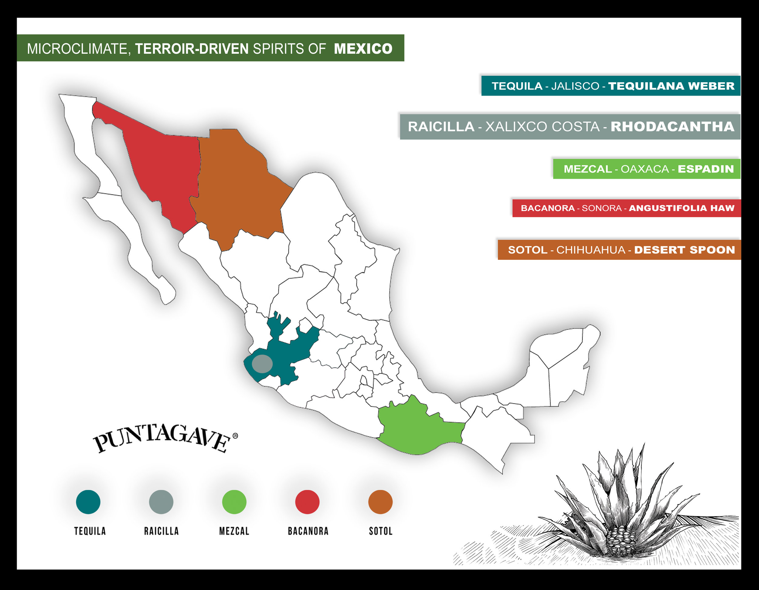 PUNTAGAVE SALES SHEET BACK 2nd edition copy.jpg