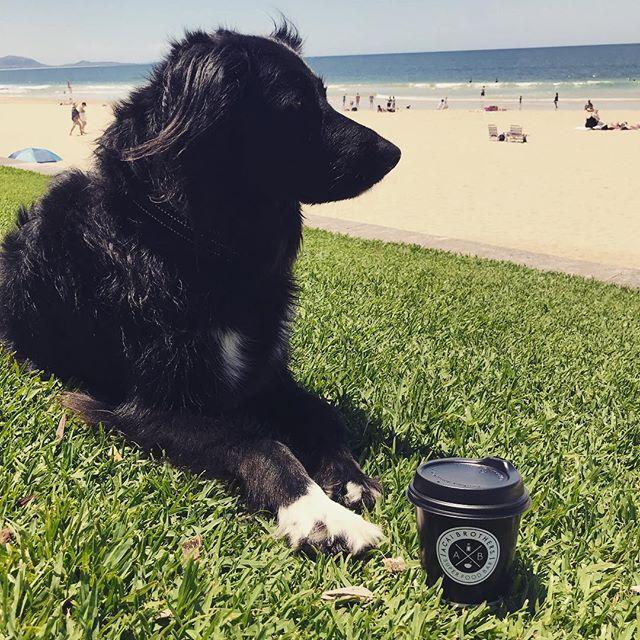 Just chill'n . . . . #surfanddrinkcoffee #acaibrothers #acaibrothersmooloolaba #dangerbirdcoffee #fonzithedog #specialtycoffee #sunshinecoastcoffee #mooloolaba