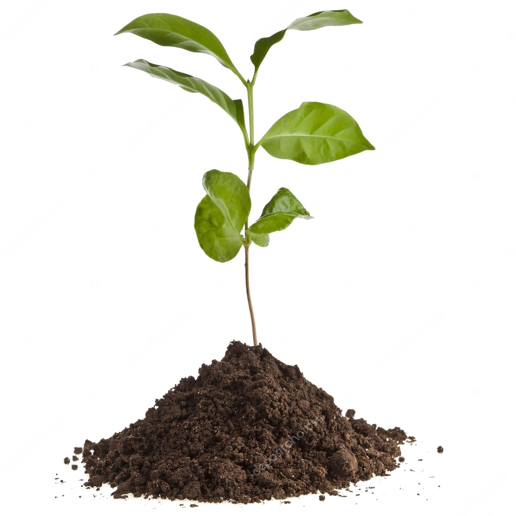 depositphotos_13839825-stock-photo-coffee-plant-seedling-in-the.png