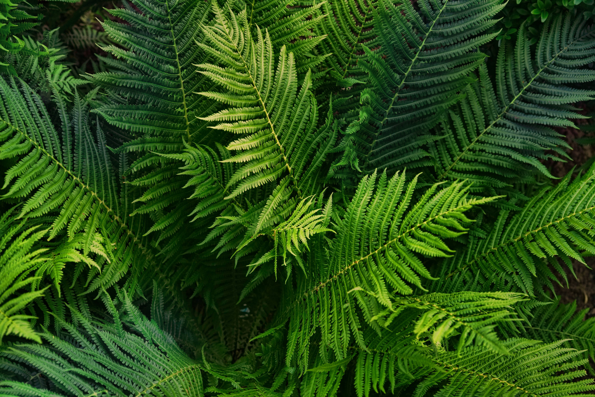 adobe-ferns.jpeg