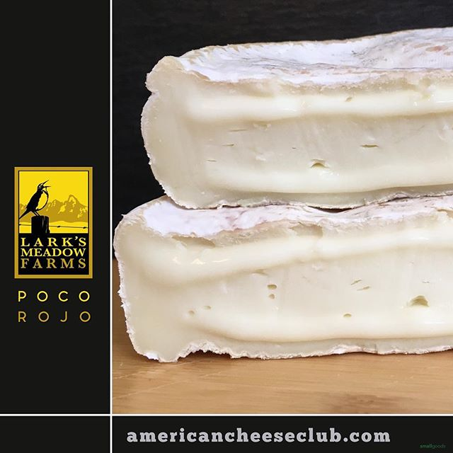 This is a unique cheese that just went out in the 17th installment of our monthly American cheese box. It's Poco Rojo, from Idaho's, Lark's Meadow Farm. Poco's a soft, silky and lush Portuguese-style sheep's milk cheese. What makes it unique is Cheesemaker Kendall's, use of thistle rennet. She's a rare one and delicious one, indeed. ⠀ .⠀ americancheeseclub.com // @americancheeseclub // Start getting monthly boxes of delicious American cheese. Link in bio. ⠀ .⠀ @larksmeadowfarm  #smallgoods #realamericancheese #epicuriousclub #americanfarmers #dairy #americancheese #americancheeseclub #cheeseclub #ilovecheese #sdfoodie #culturecheese  #smallgoods_ #larksmeadowfarms #idahocheese