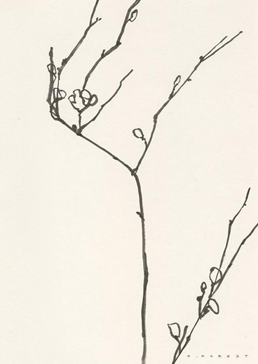 FForest_Drawing_Branch#11.jpg
