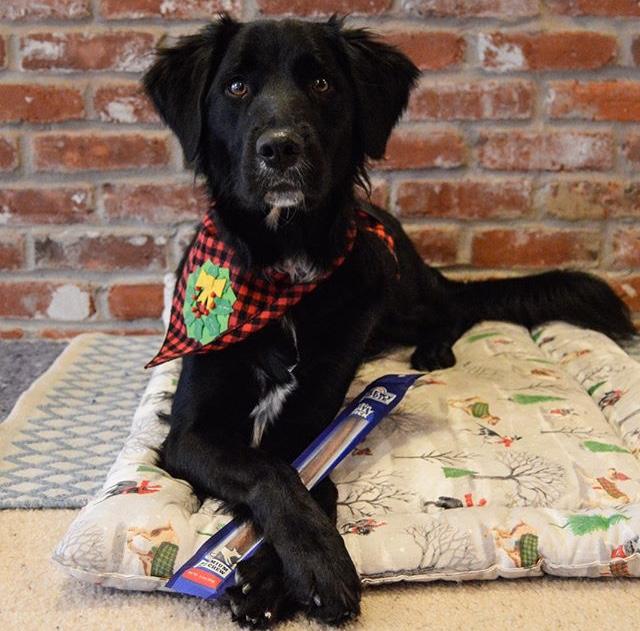 807101-@orphan.annie.dogBullyinPackaging-testimonialphotos-1217.jpg