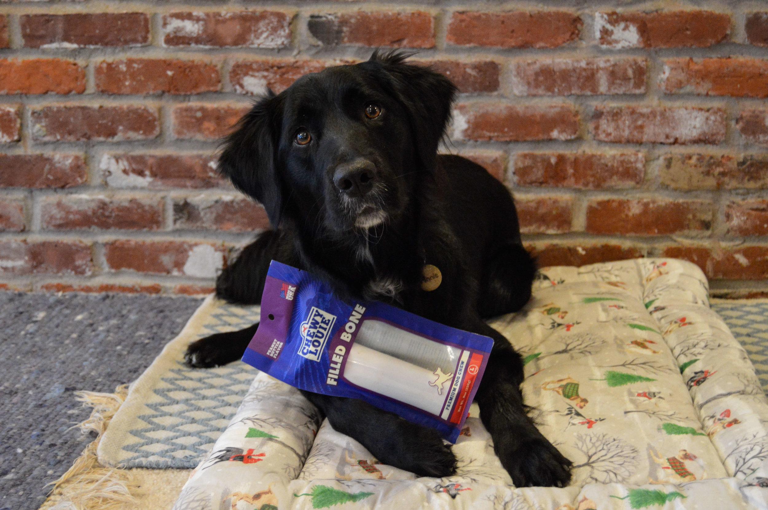 806103-@orphan.annie.dog-testimonialphoto-1217.jpg