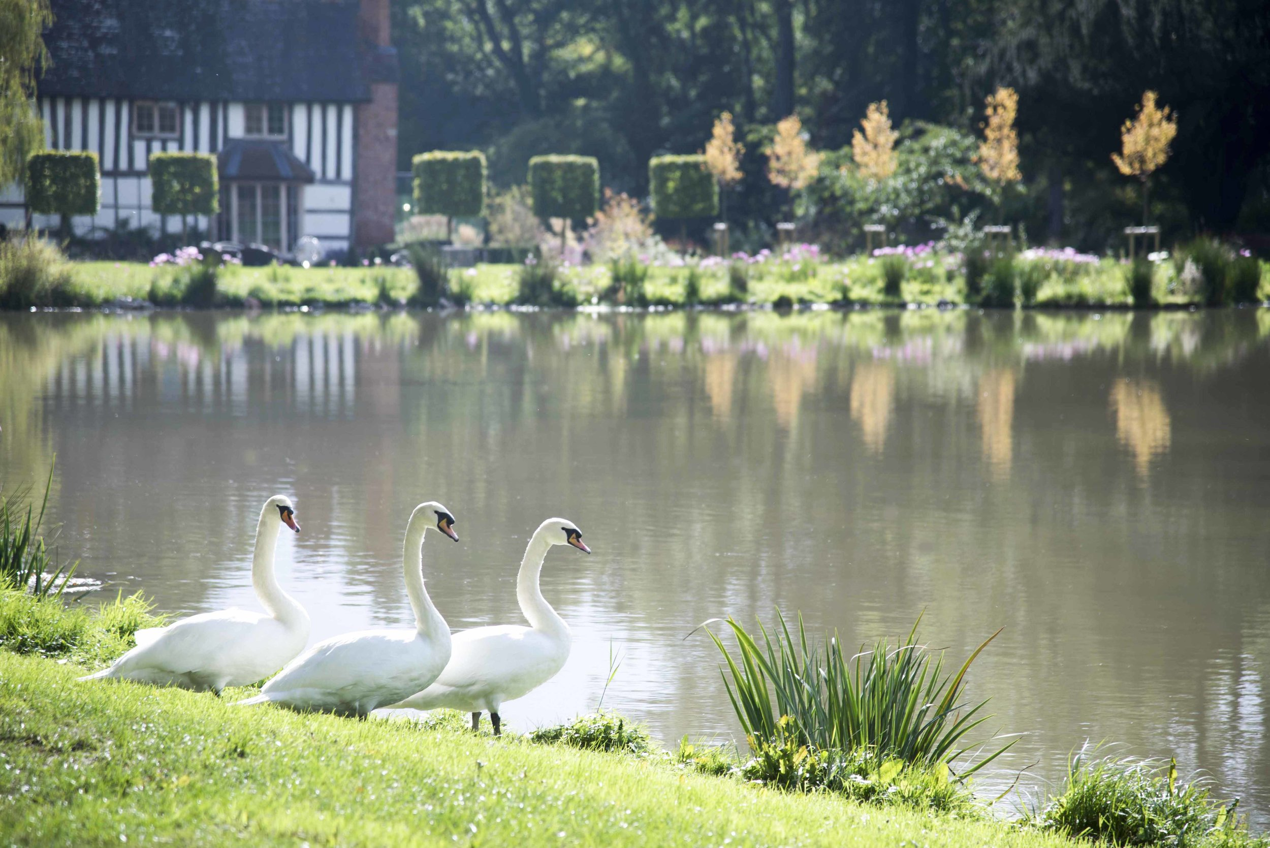 The Lake & Gardens -