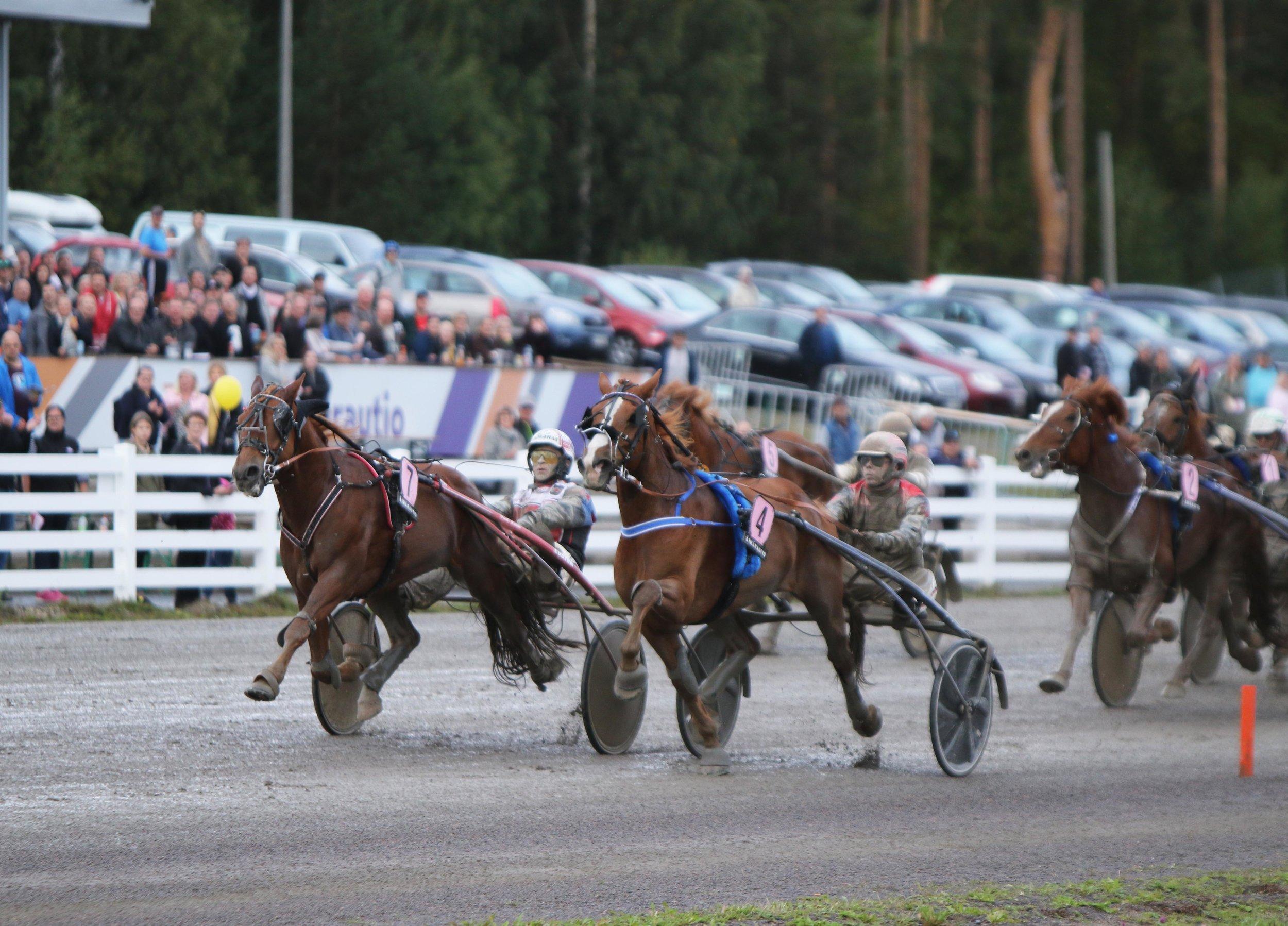 Henri Bollströmin ohjastama Tähen Toivomus (vas.) taisteli Kavioliigan ensimmäisen osakilpailun voitosta. Kuva: Hippos / Hanna Laakso