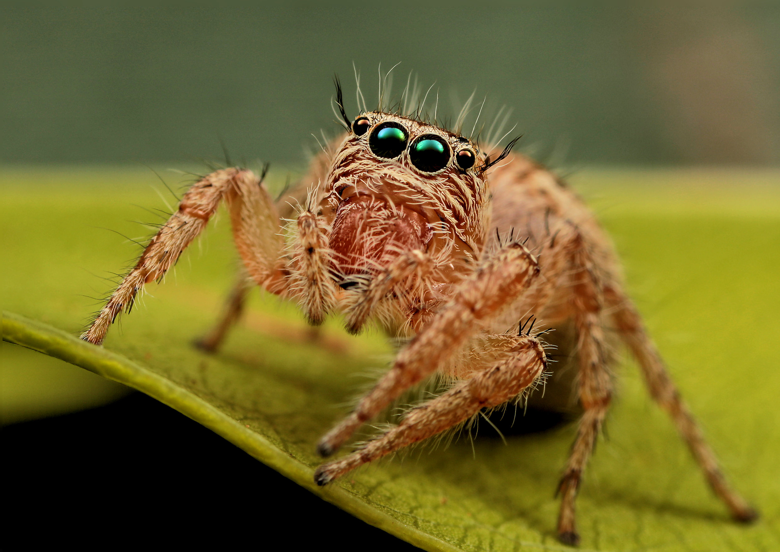 Why helllloooo there…I am just your friendly neighbourhood spider