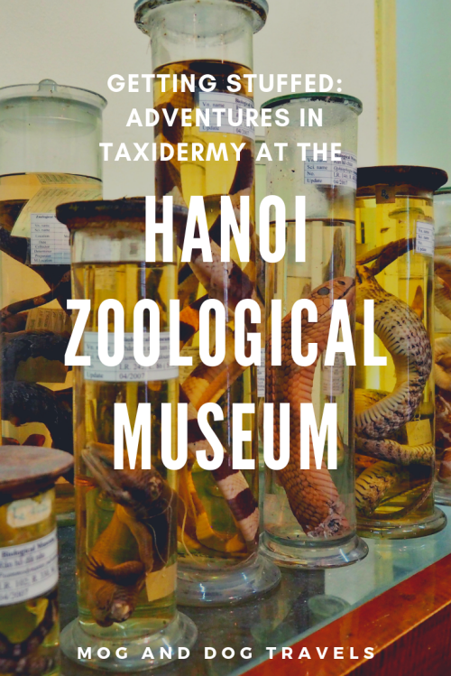Zoological Museum Hanoi Title Page Resized.png