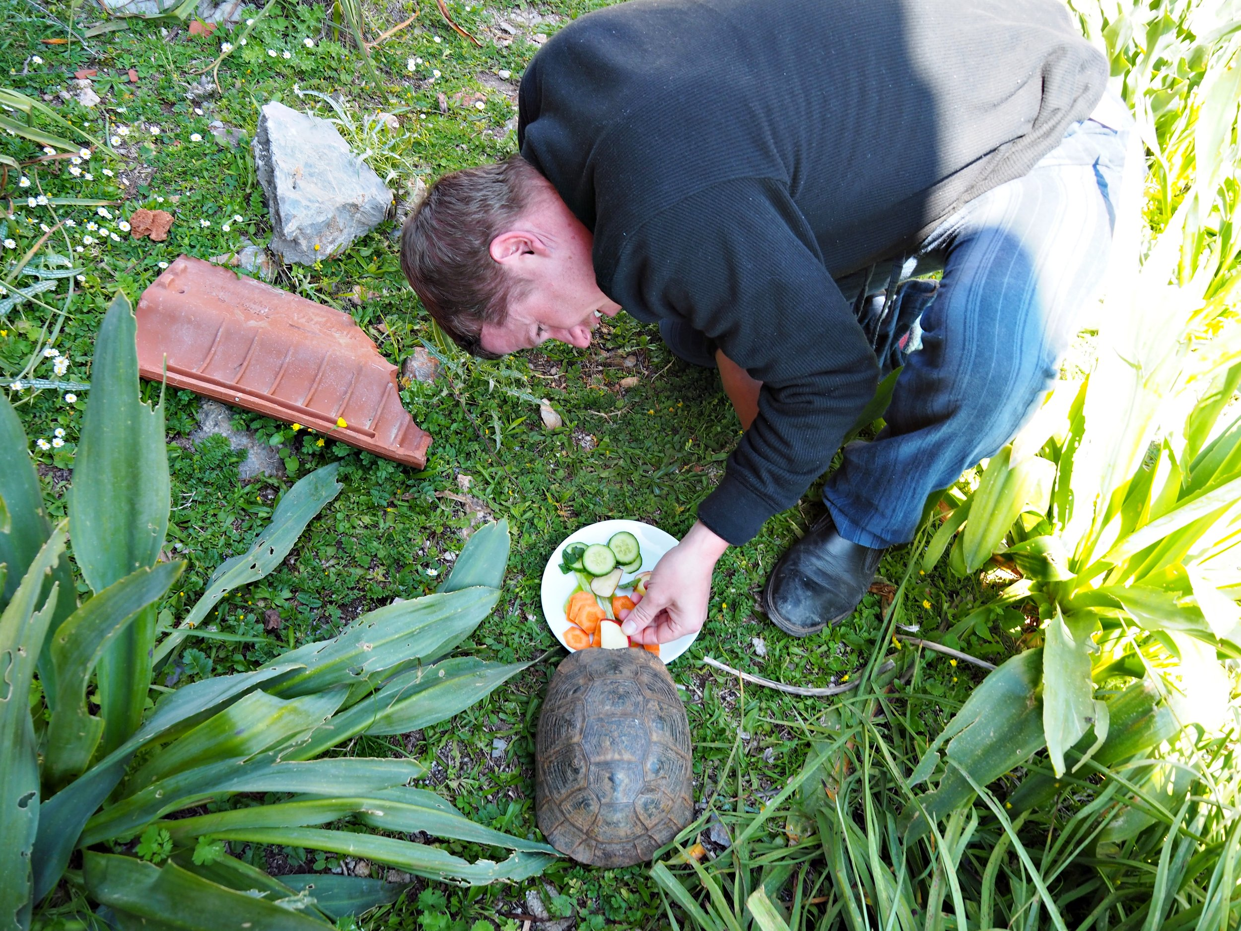 Vincent making sure one of our tortoise friends gets his 5-a-day of fruit and vegetables.