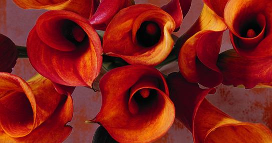 Orange Lilies.jpg