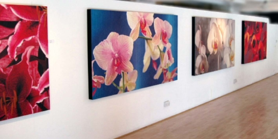Hothouse flowers Oxo exhibition.jpg
