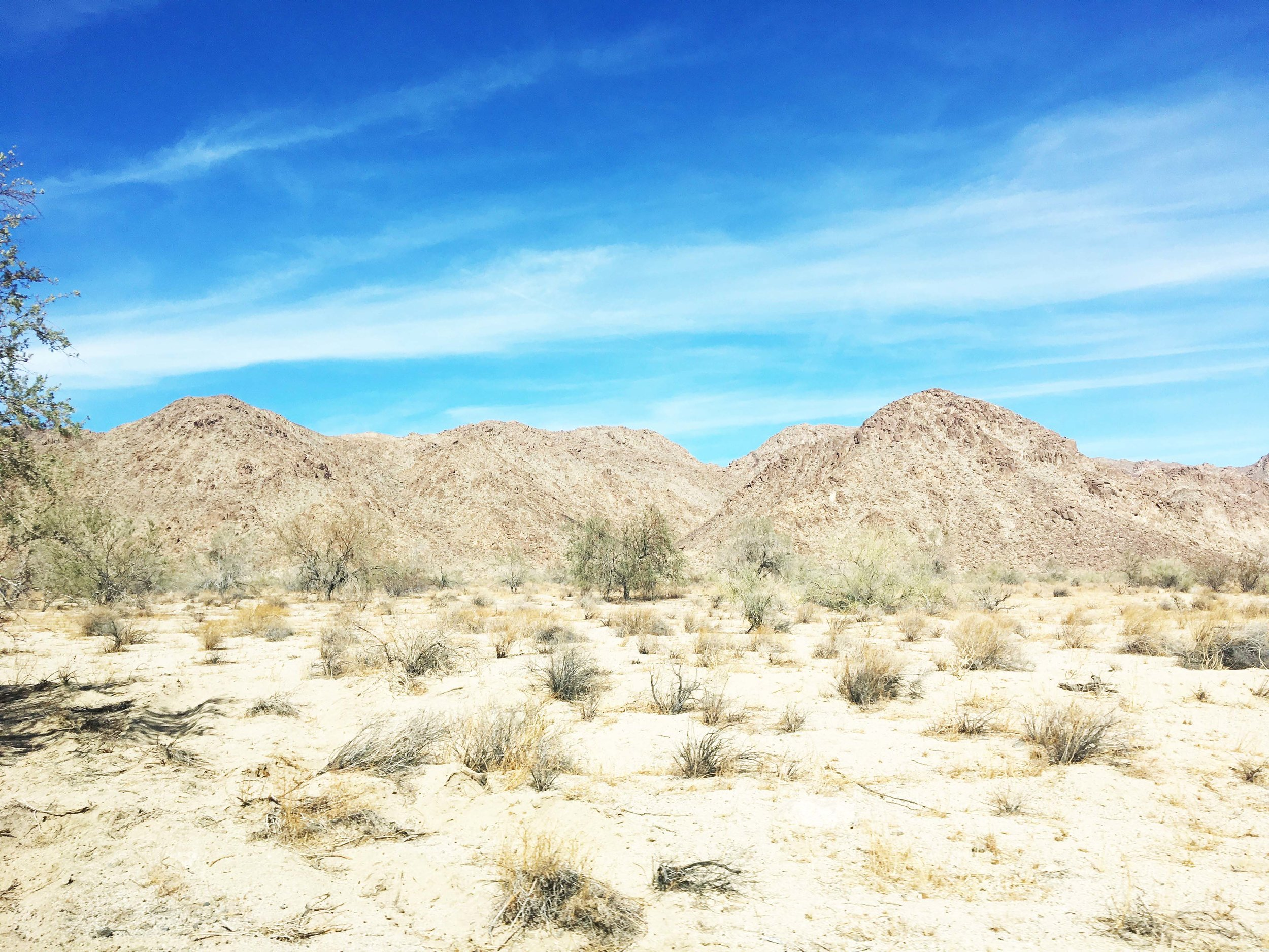 the more barren parts of joshua tree on the southern side of the park