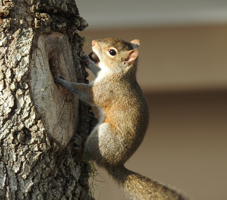 squirl.jpg