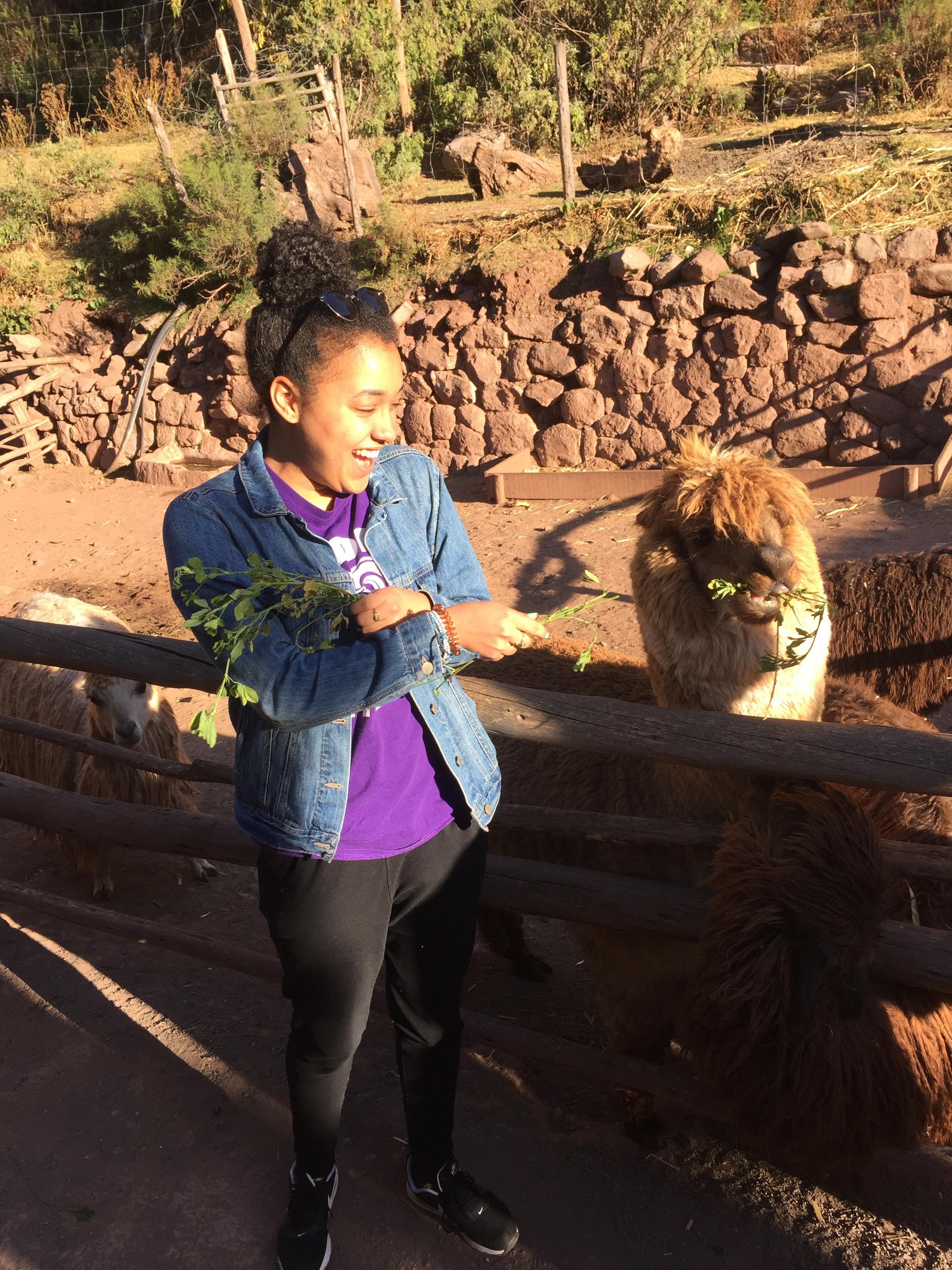 Meeting a llama in Cusco!