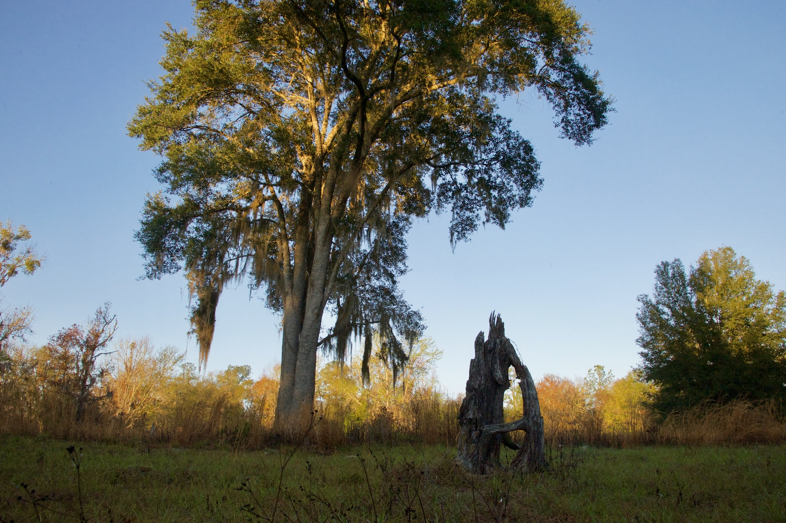 Questions about Prairie Creek Conservation Cemetery? -
