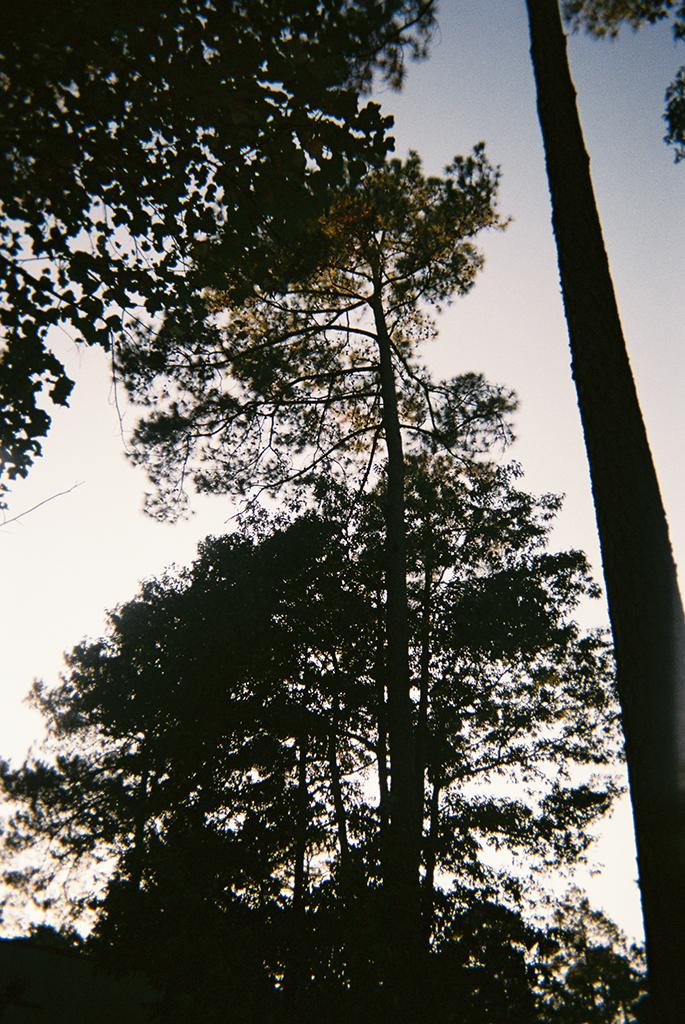 Tocando el Cielo     Tan bello es poder soñar, como cuando ves un arbol y te imaginas tocar el cielo.      Touching the Sky   It's so beautiful to be able to dream, like when you're looking at a tree and it makes you feel that you're touching the sky.