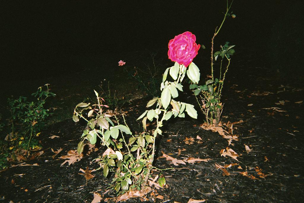 Bloom     As women, we are strong and able to tackle adverse conditions. The most beautiful women are able to bloom in the least fertile soil.      Florecer   Como mujeres somos fuertes y capaces de enfrentar las adversidades. Las mujeres más increíbles son las que logran florecer en la tierra menos fértil.